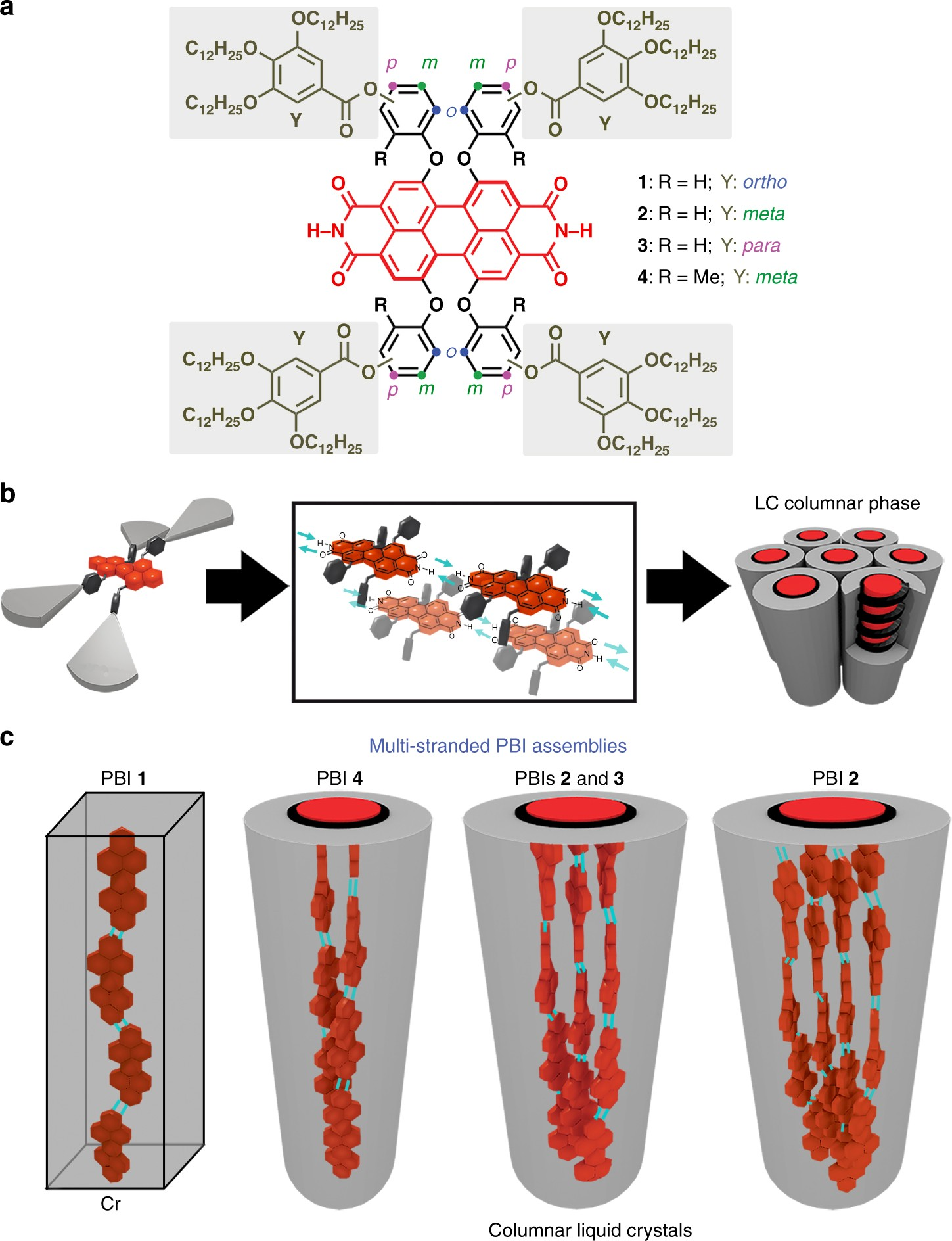 Self-assembly of multi-stranded perylene dye J-aggregates in