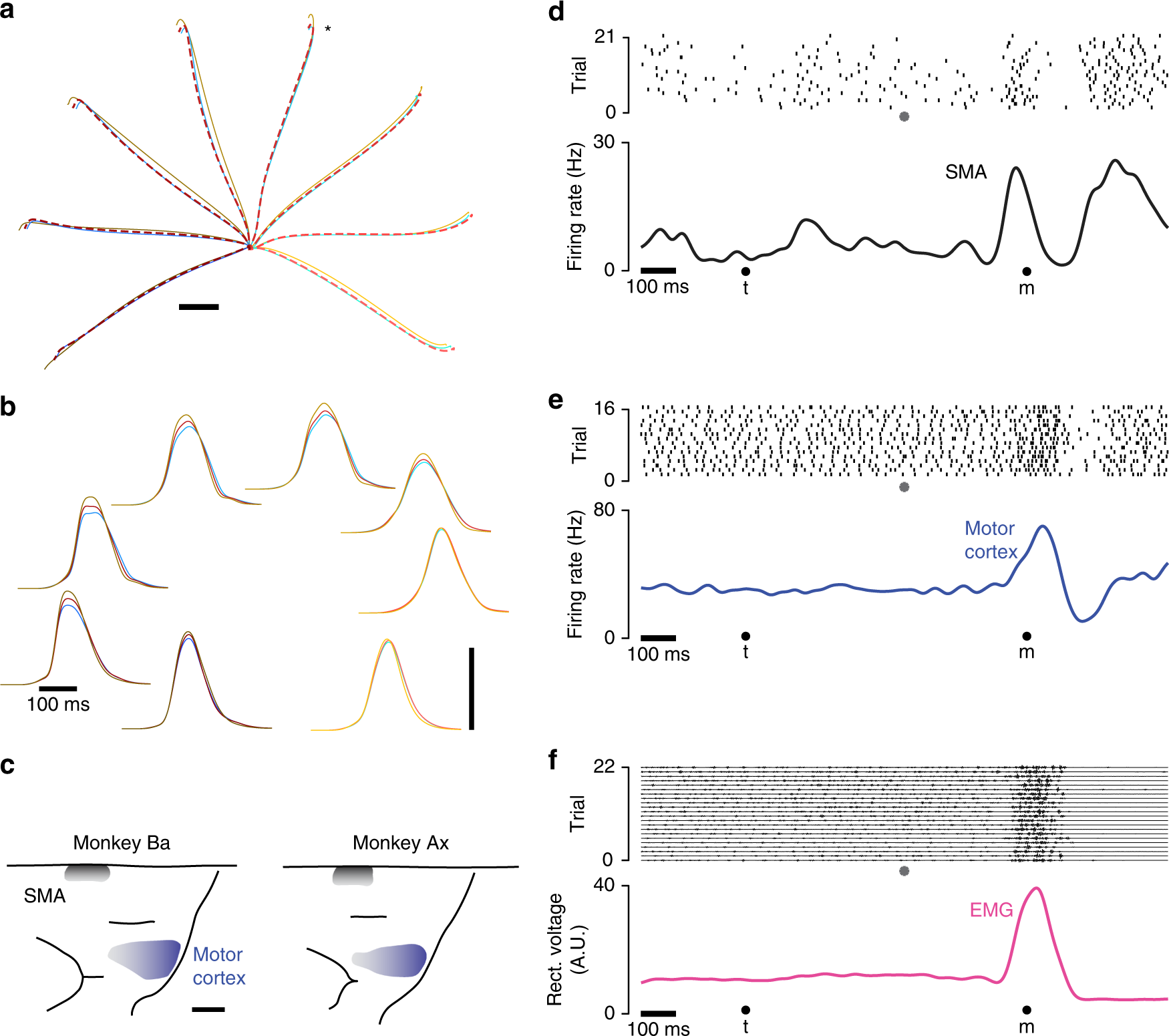 Different population dynamics in the supplementary motor
