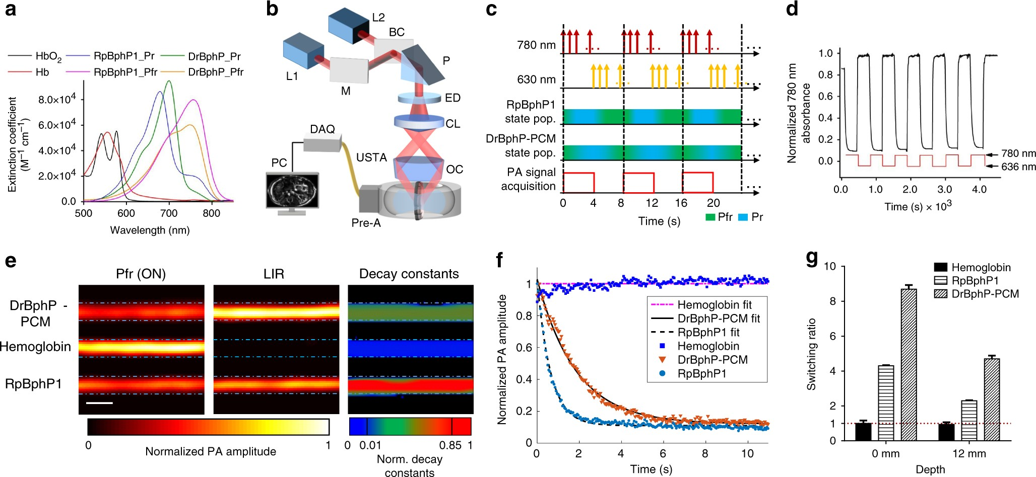 Small Near Infrared Photochromic Protein For Photoacoustic Multi Gate Door Simple On Off Ir Photoswitch Contrast Imaging And Detection Of Interactions In Vivo Nature Communications