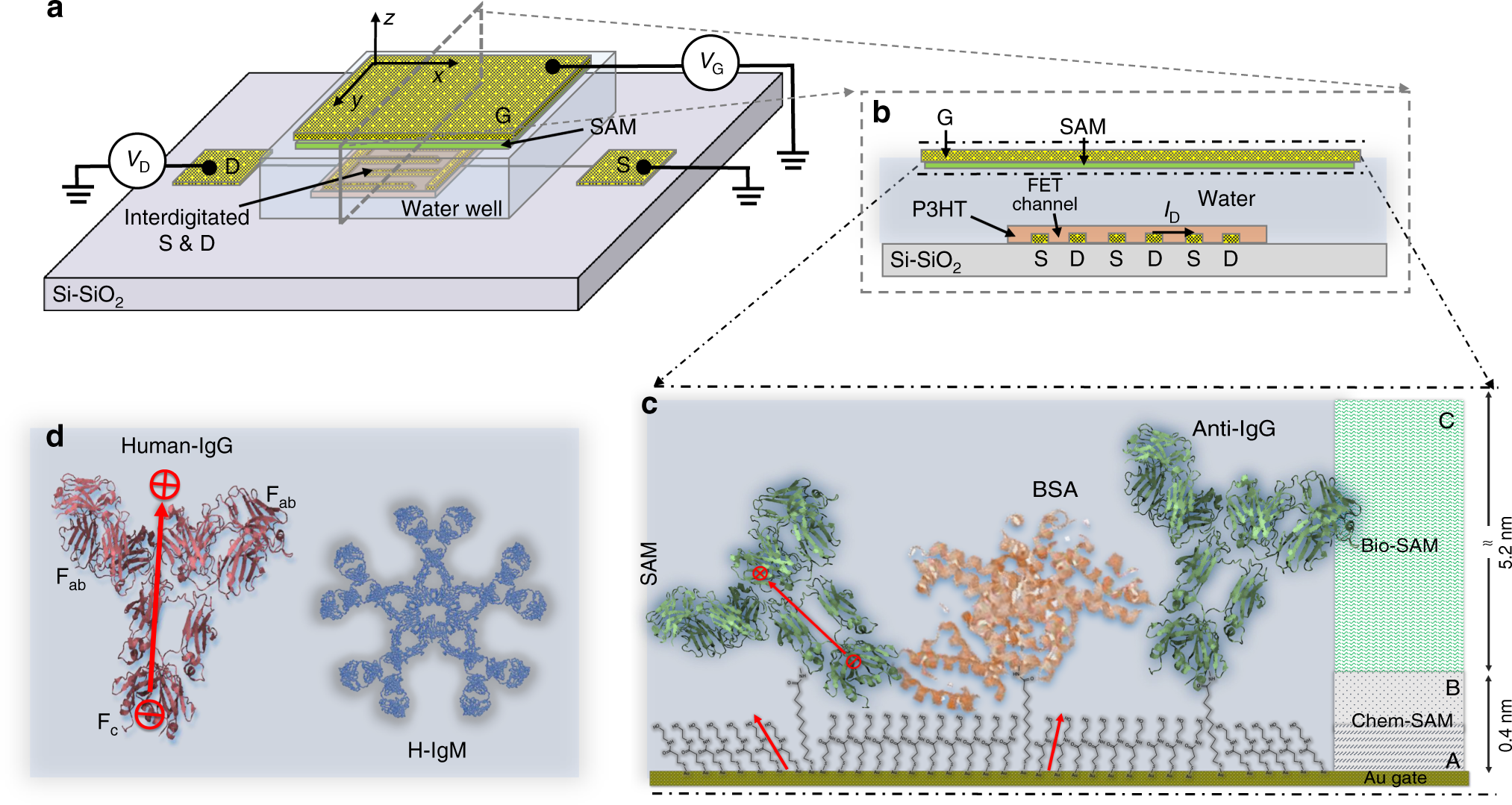 Single Molecule Detection With A Millimetre Sized Transistor Gold Detector Schematic Diagram Nature Communications