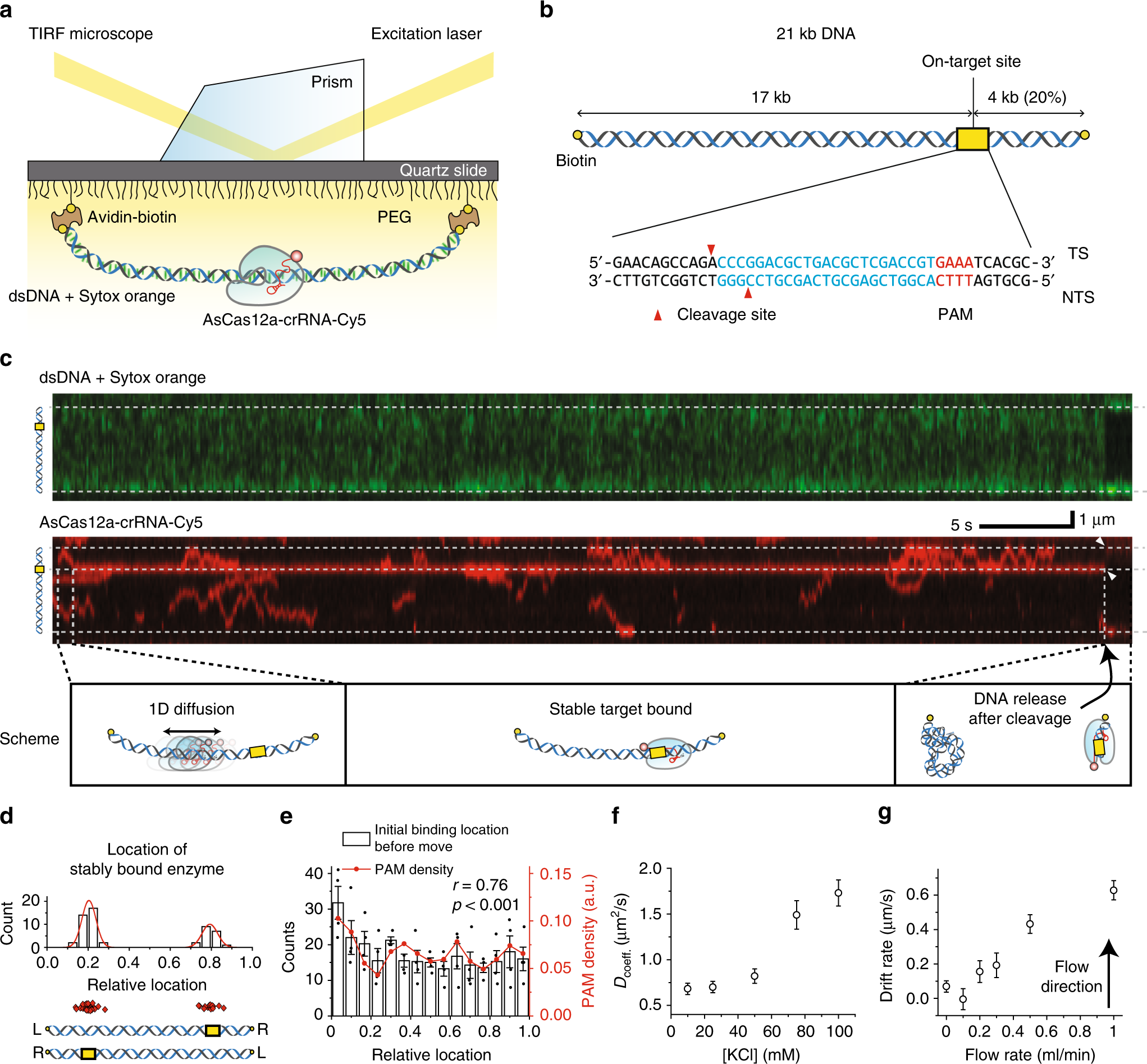 Direct observation of DNA tar searching and cleavage by CRISPR