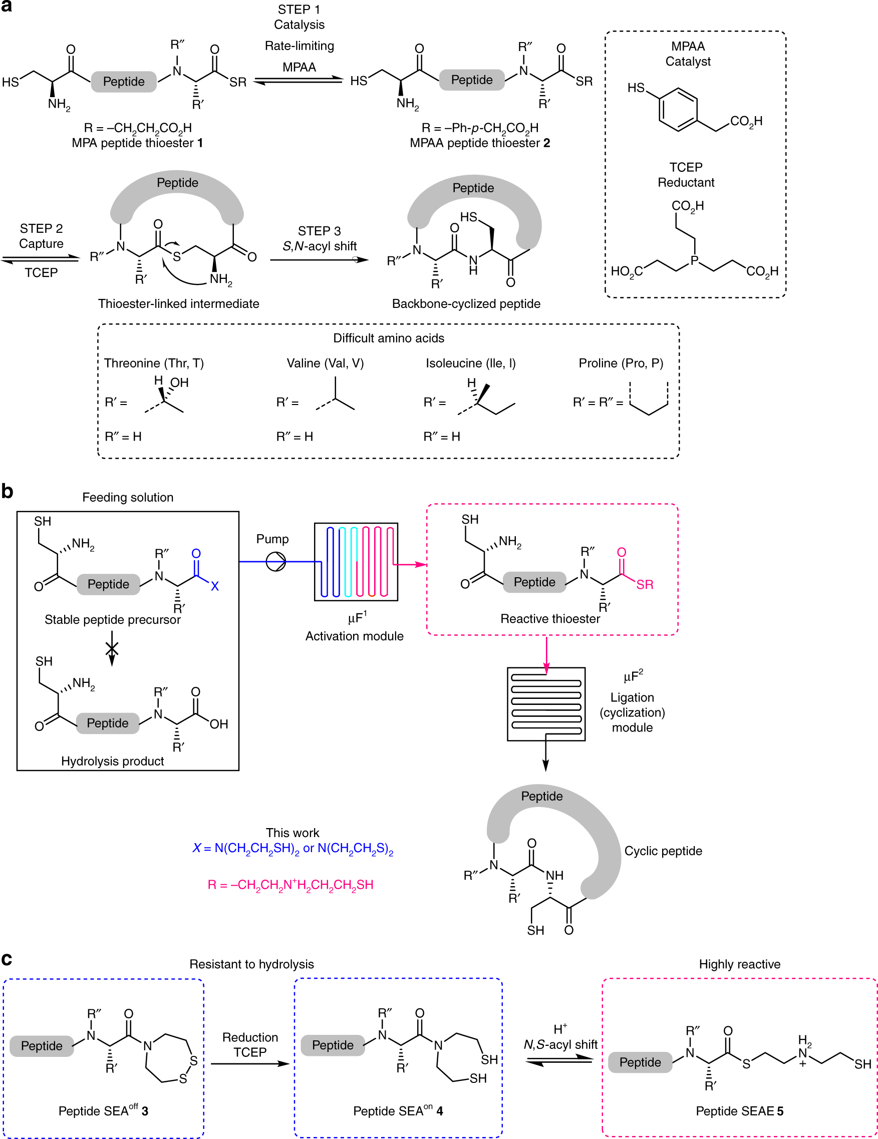 Accelerated microfluidic native chemical ligation at difficult amino acids  toward cyclic peptides | Nature Communications