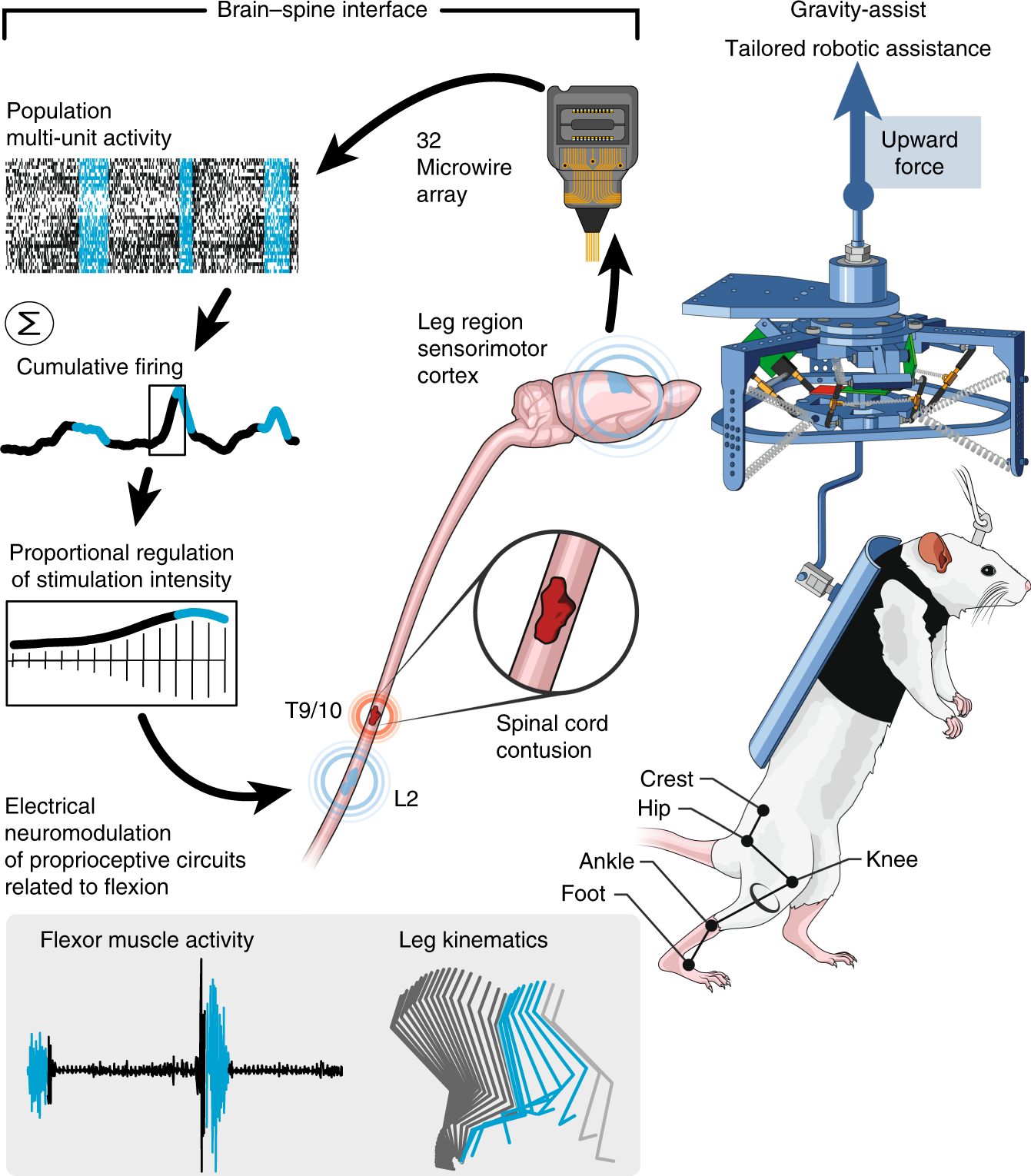 Brain Controlled Modulation Of Spinal Circuits Improves Recovery Na50 Wiring Diagram From Cord Injury Nature Communications