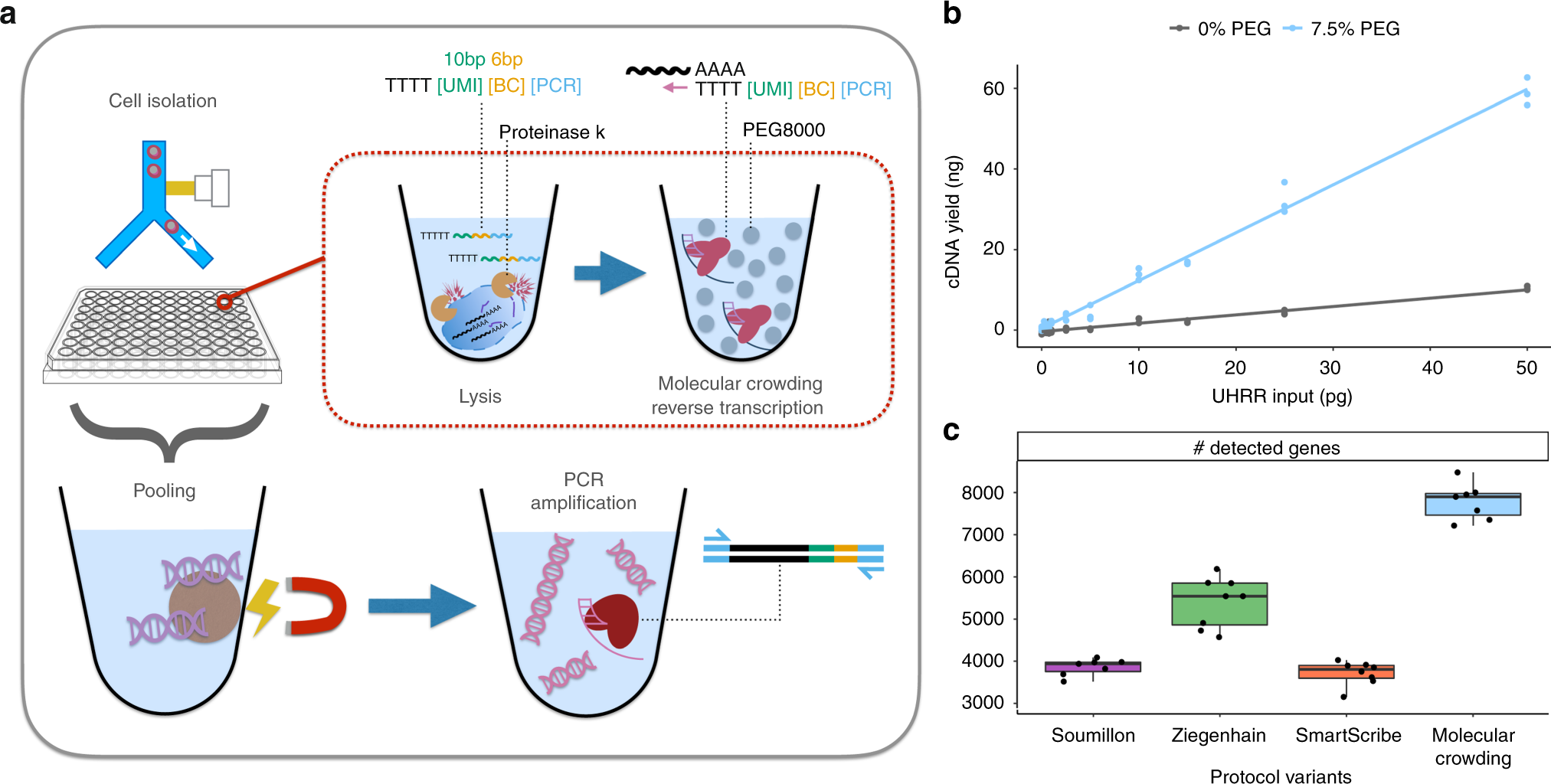 Sensitive And Powerful Single Cell Rna Sequencing Using