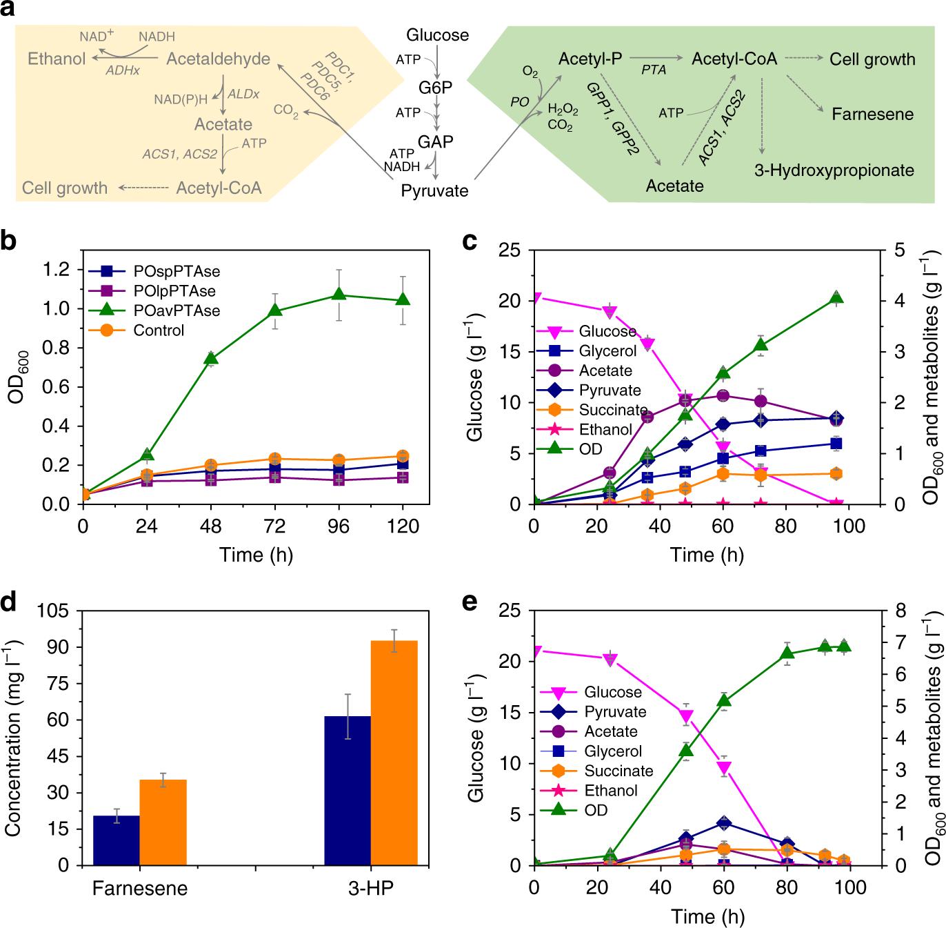 Global Rewiring Of Cellular Metabolism Renders Saccharomyces Tippmann 98 Custom Parts Diagram Cerevisiae Crabtree Negative Nature Communications