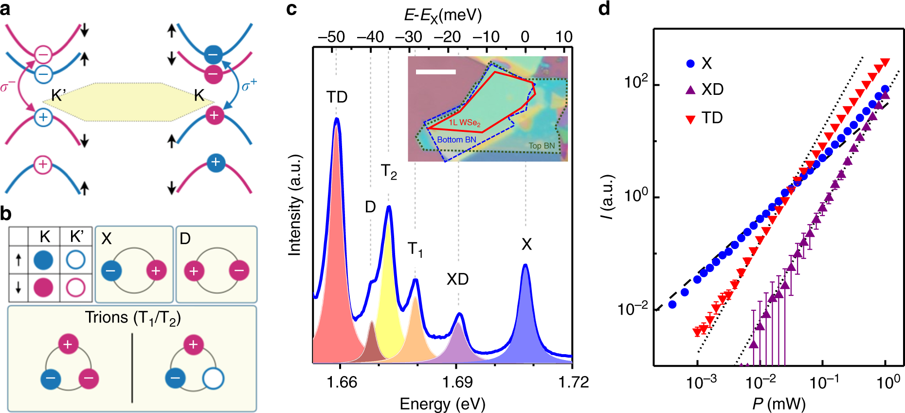 Coulomb-bound four- and five-particle intervalley states in