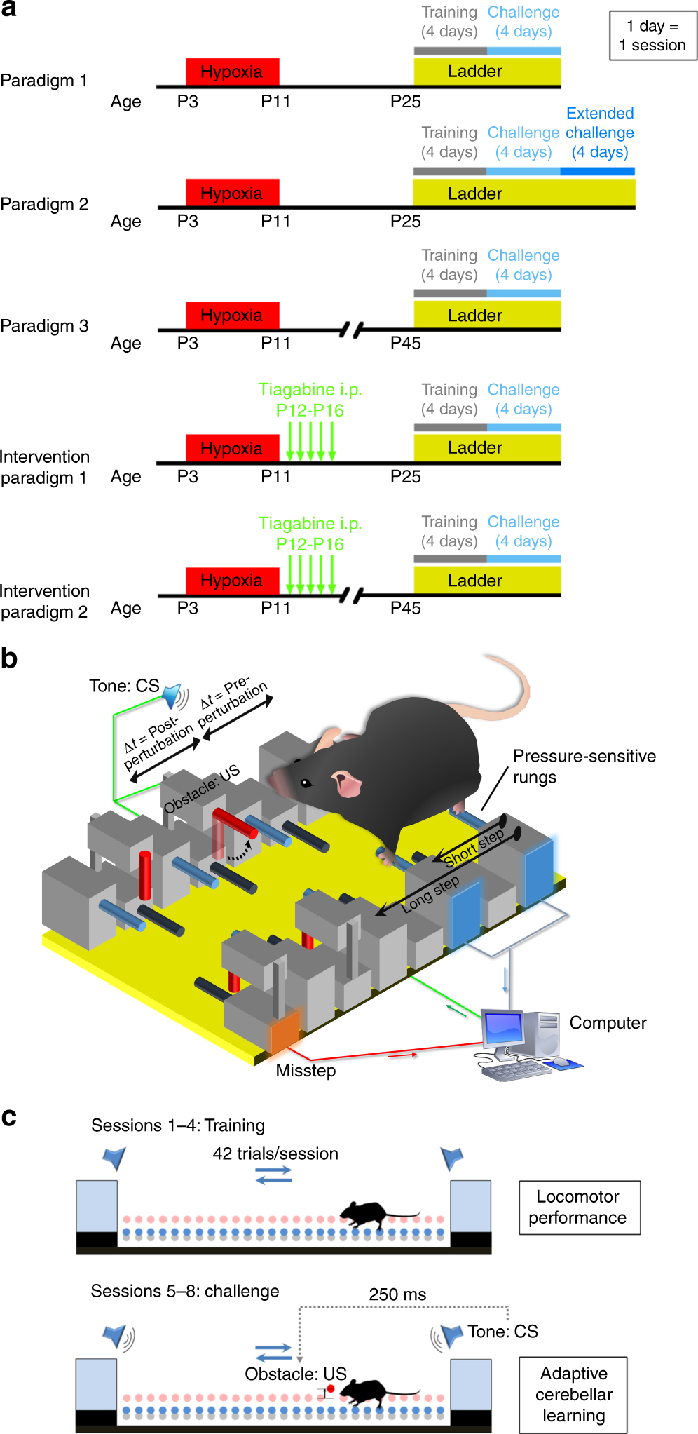 Neonatal Brain Injury Causes Cerebellar Learning Deficits And Logic Diagram The Second Rung Of See A Simple Ladder Purkinje Cell Dysfunction Nature Communications