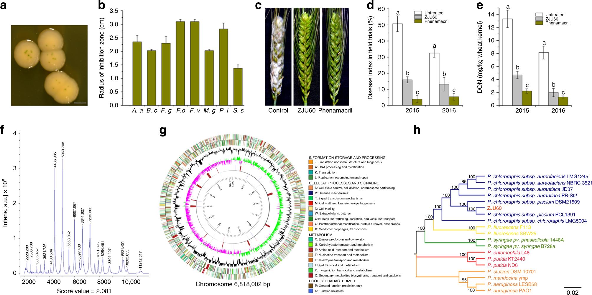 Wheat microbiome bacteria can reduce virulence of a plant
