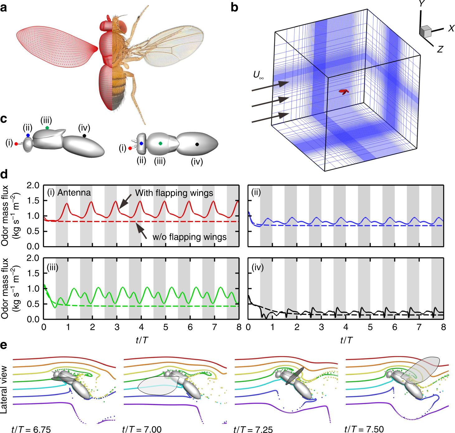 A Balance Between Aerodynamic And Olfactory Performance During Flight In Drosophila