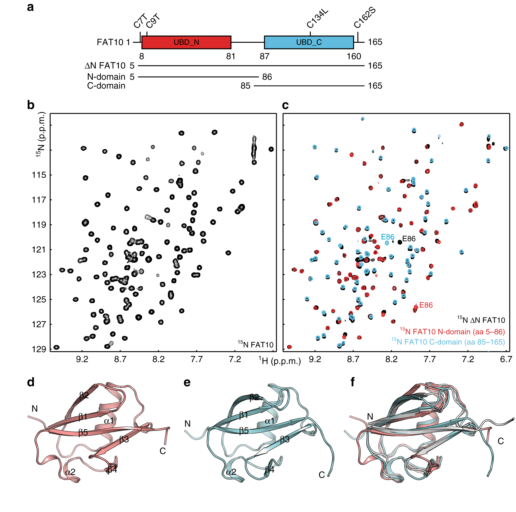 The structure of the ubiquitin-like modifier FAT10 reveals an