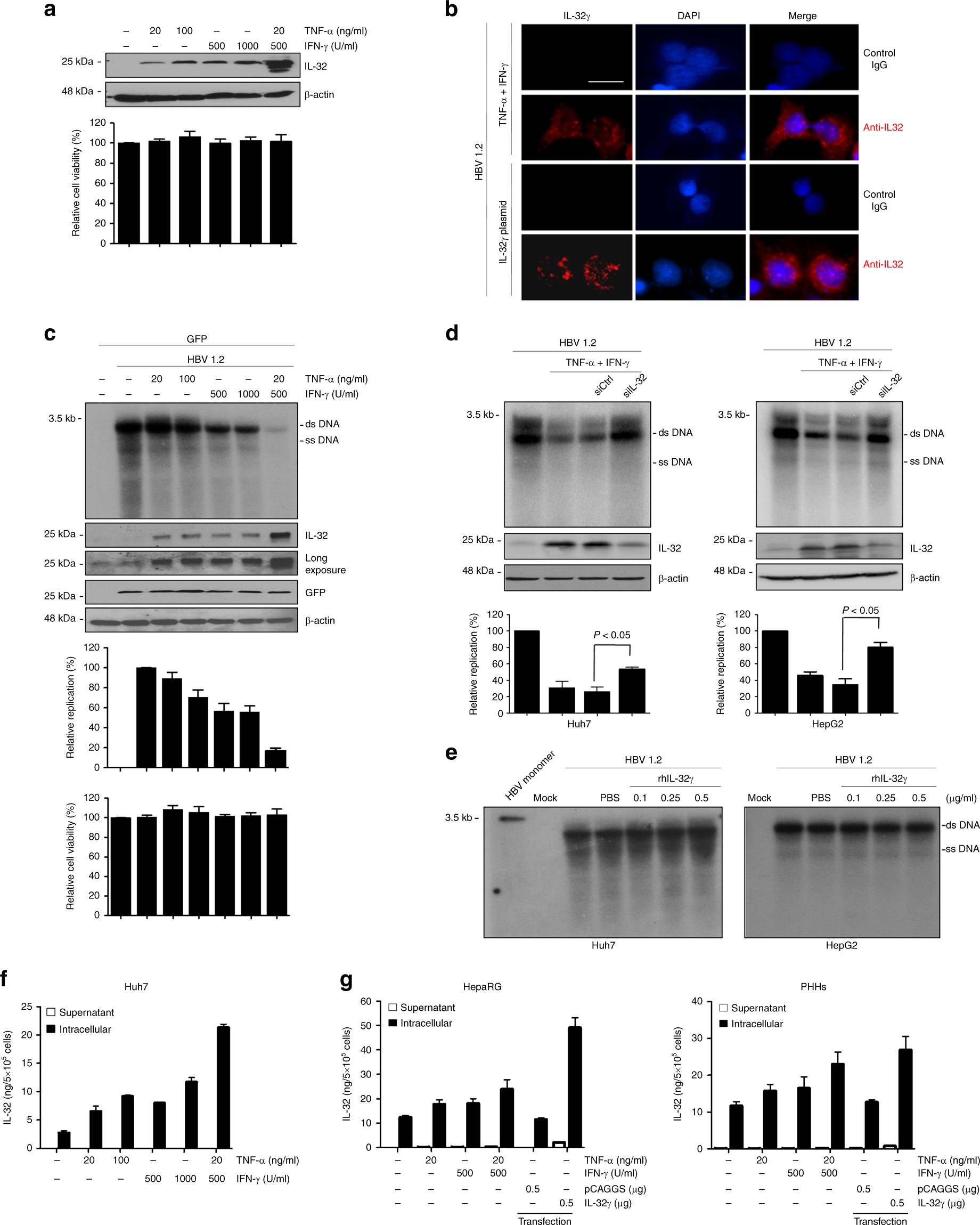 Intracellular interleukin-32γ mediates antiviral activity of
