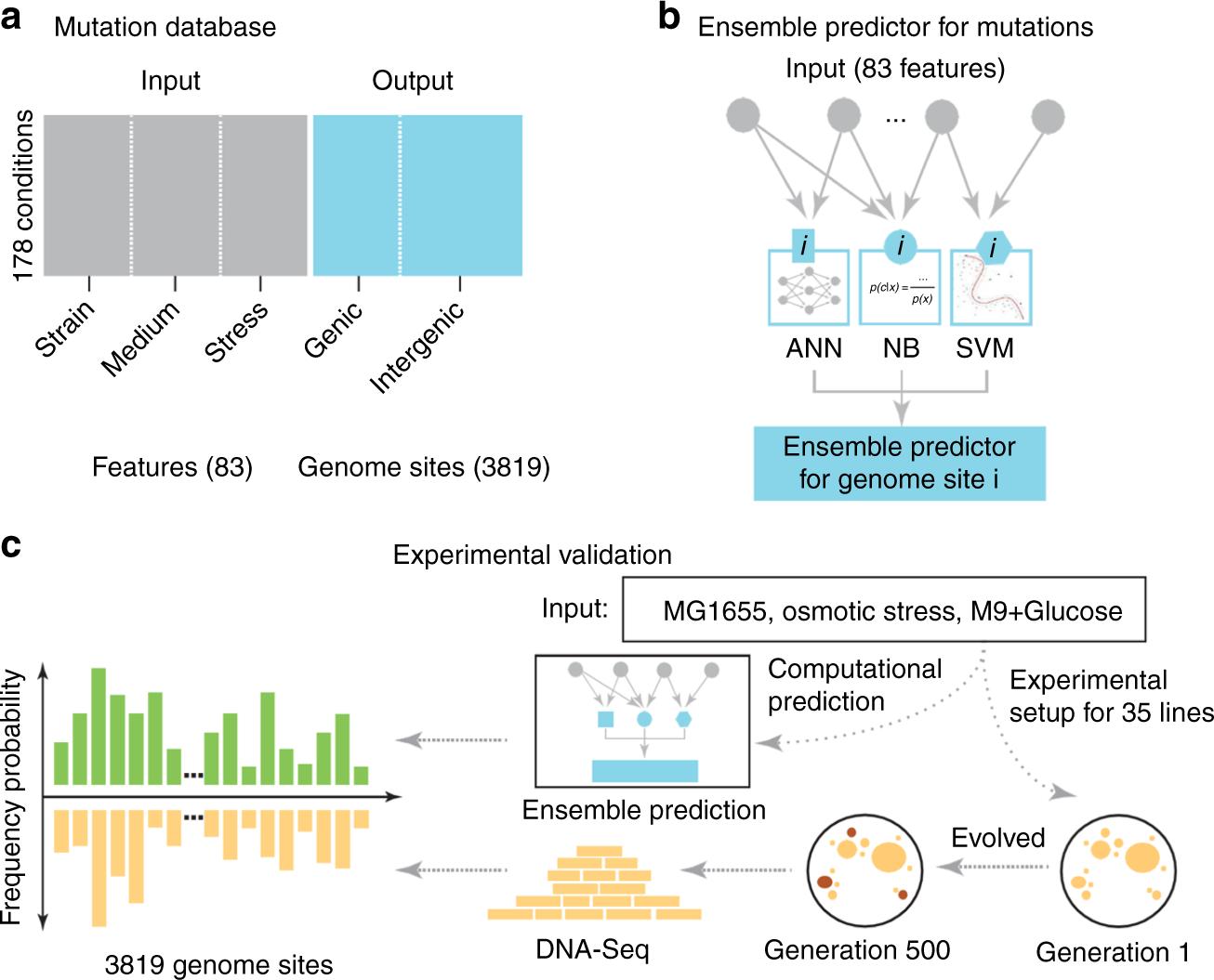 Predicting the evolution of Escherichia coli by a data