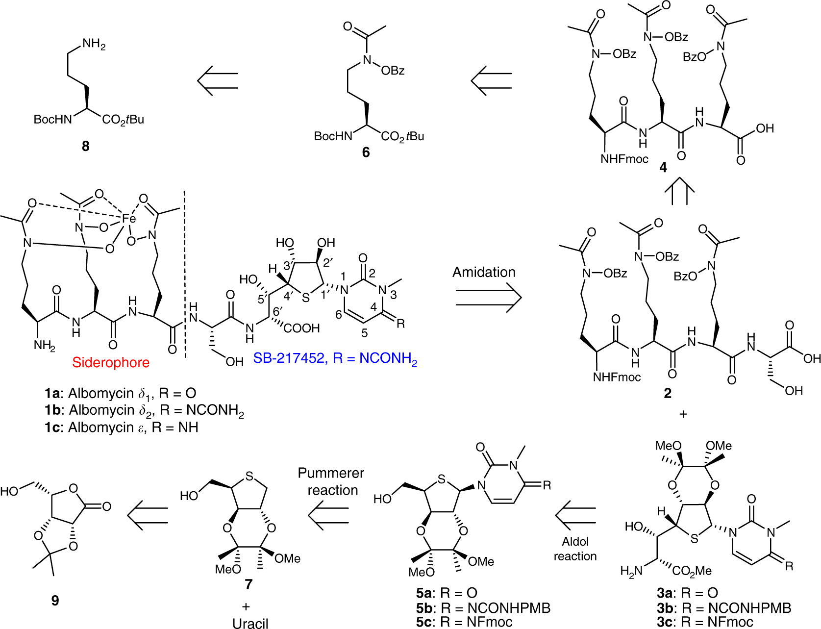 c37bca65130c Total synthesis and antimicrobial evaluation of natural albomycins against  clinical pathogens