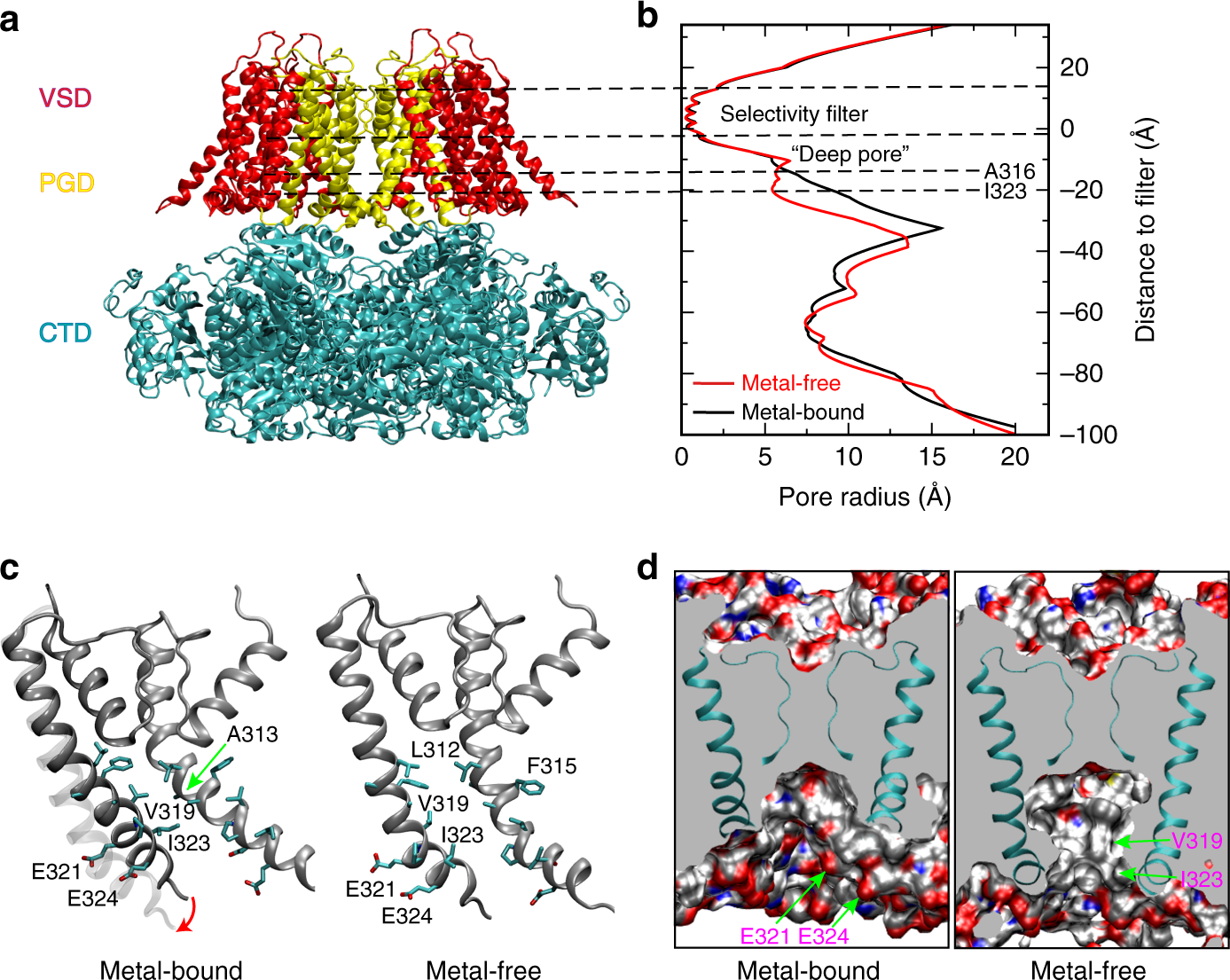 Hydrophobic gating in BK channels   Nature Communications