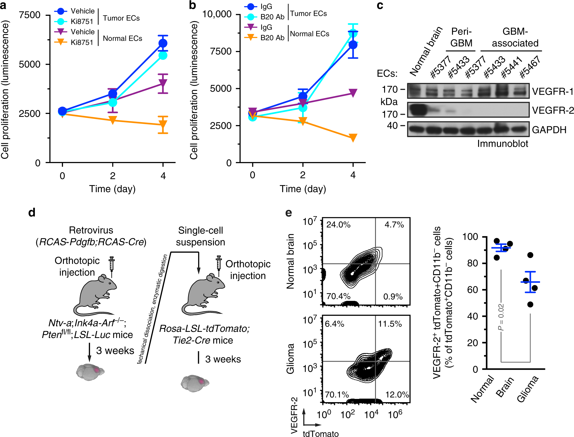 Pdgf Mediated Mesenchymal Transformation Renders Endothelial Z Transform Transfer Function Block Diagram Resistance To Anti Vegf Treatment In Glioblastoma Nature Communications