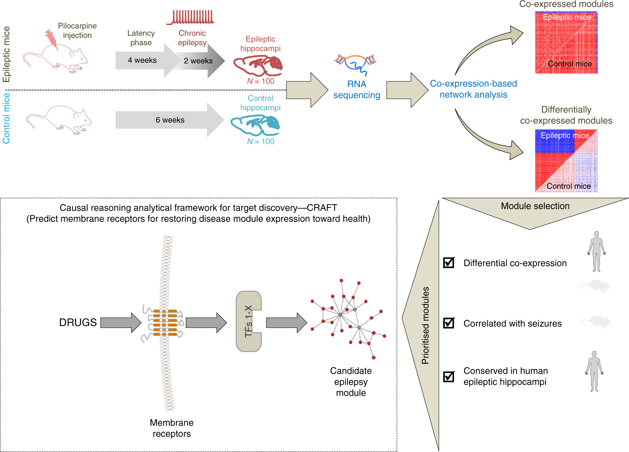 A systems-level framework for drug discovery identifies Csf1R as an
