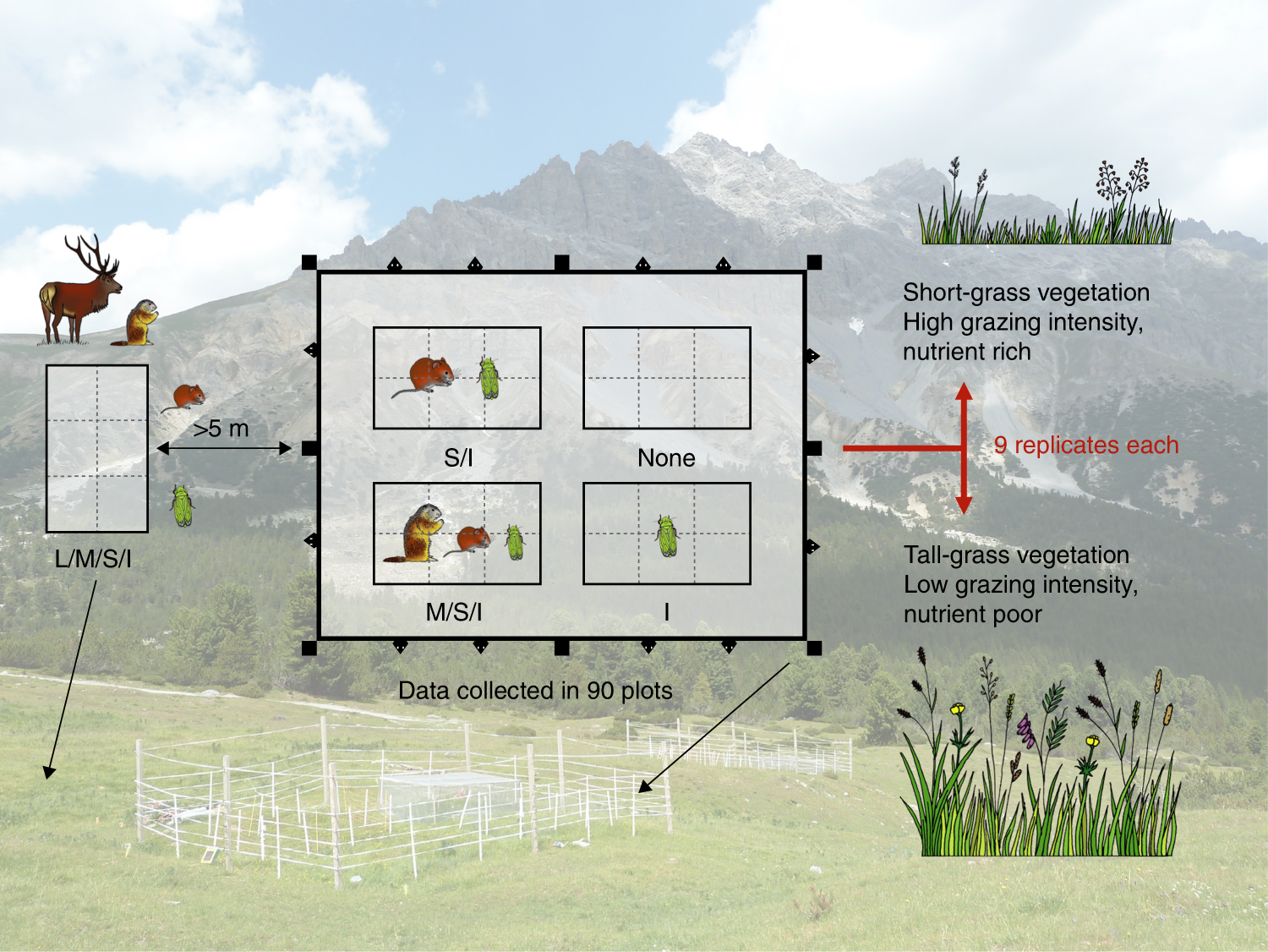Size Dependent Loss Of Aboveground Animals Differentially Affects Fourwire Electric Fence System Best Control Deer Access To Food Grassland Ecosystem Coupling And Functions Nature Communications
