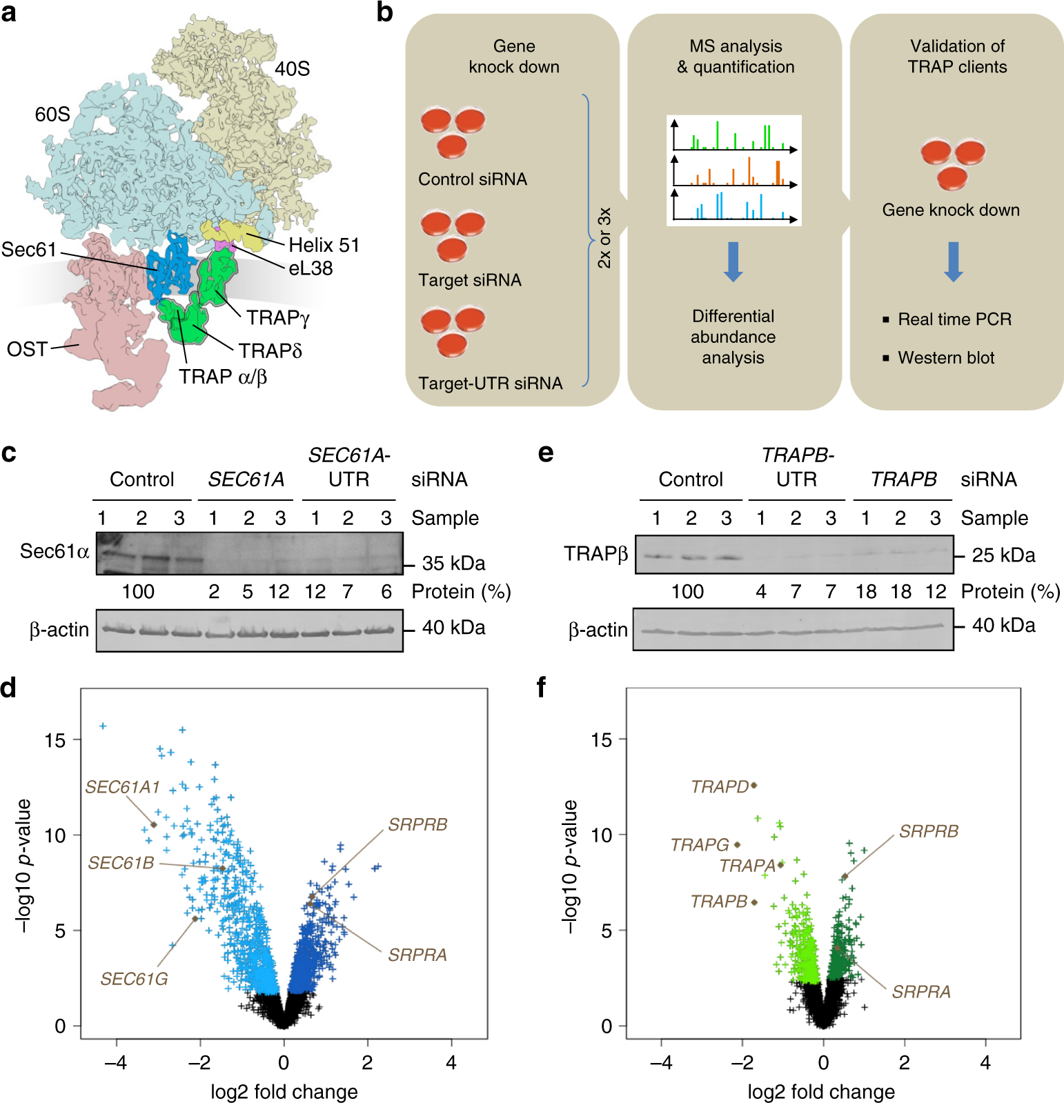 Proteomics Reveals Signal Peptide Features Determining The Client Relay Terminal 3 Cdg Specificity In Human Trap Dependent Er Protein Import Nature Communications