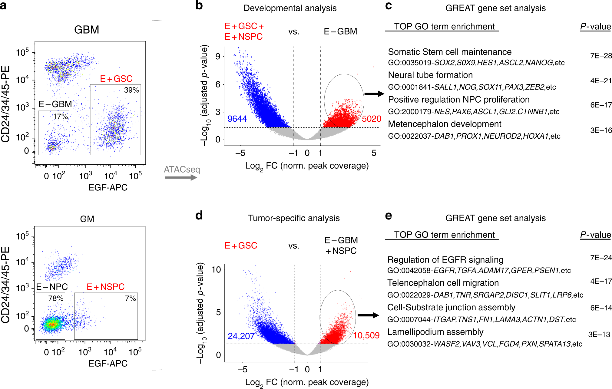 Analysis of chromatin accessibility uncovers TEAD1 as a