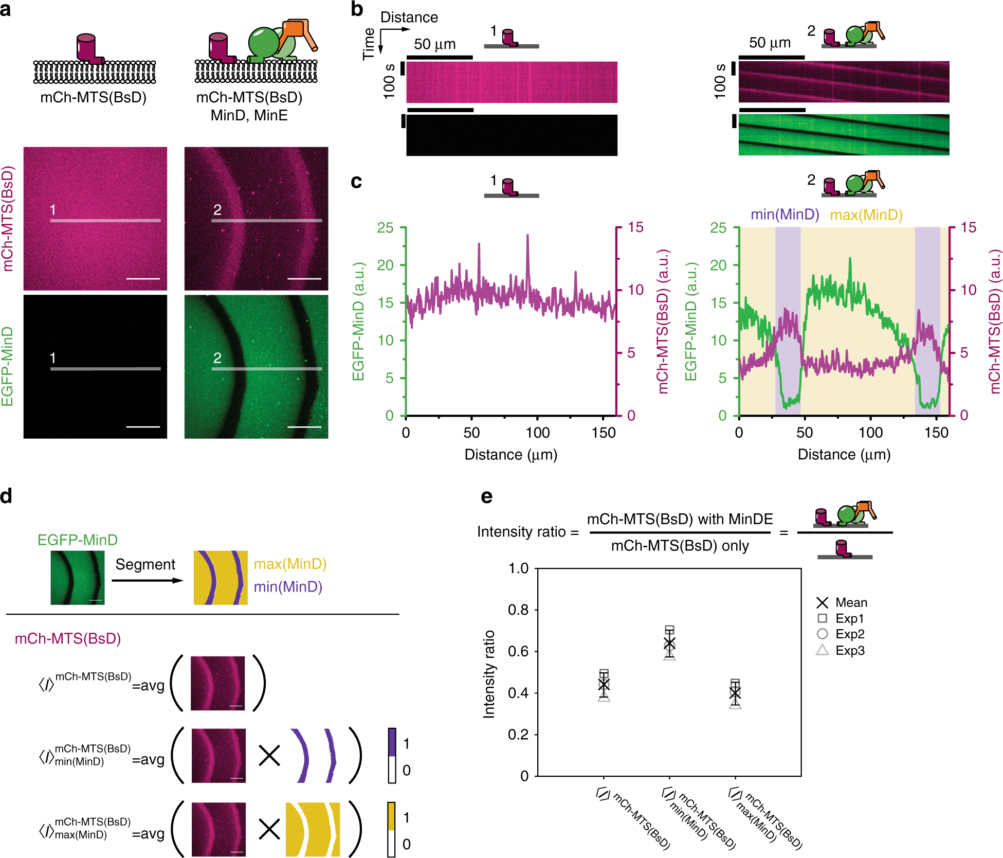 The Minde System Is A Generic Spatial Cue For Membrane Protein Led Driver 6 Channels With Phase Shift Control Distribution In Vitro Nature Communications