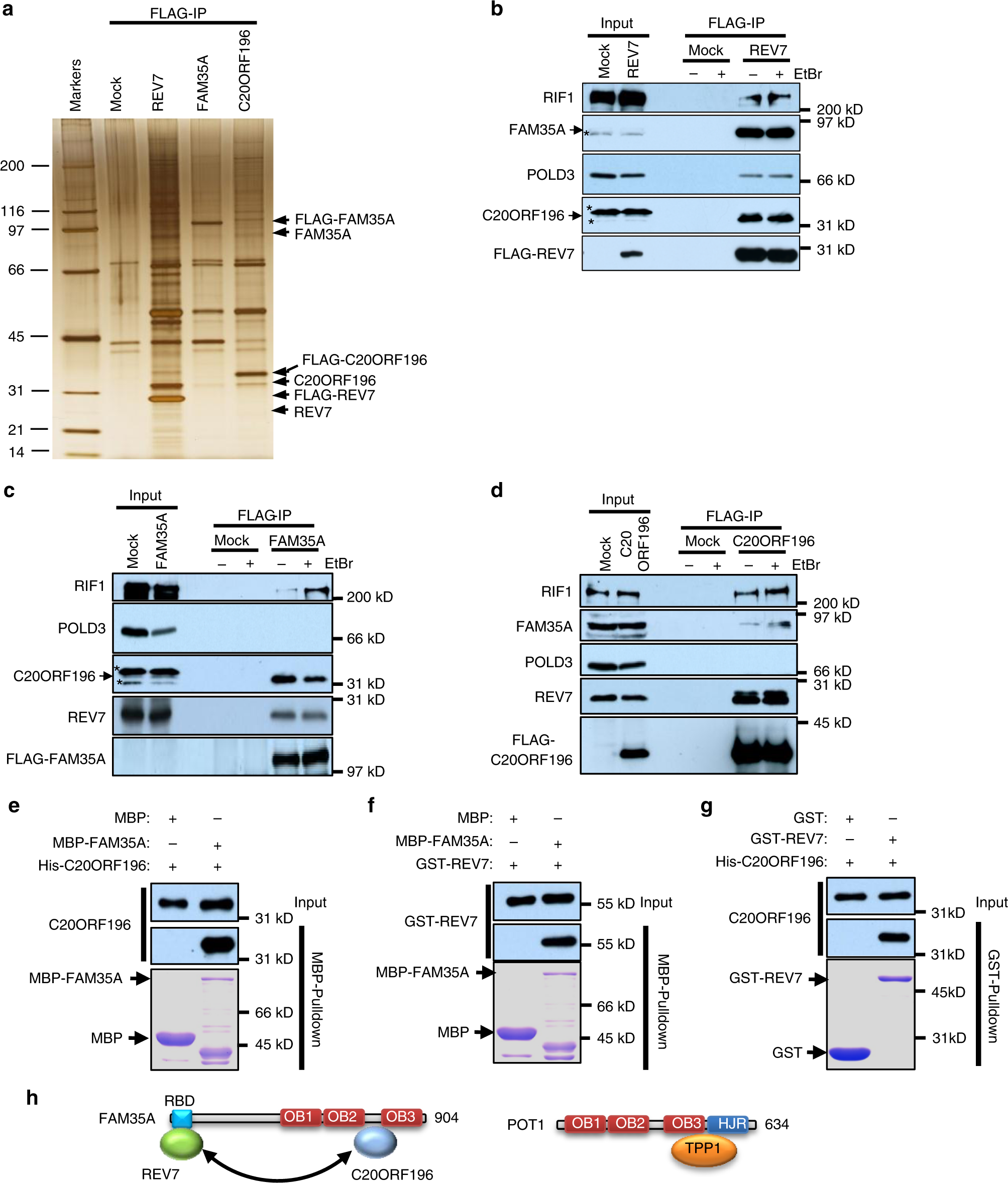 an ob fold complex controls the repair pathways for dna Series and Parallel Circuits Diagrams
