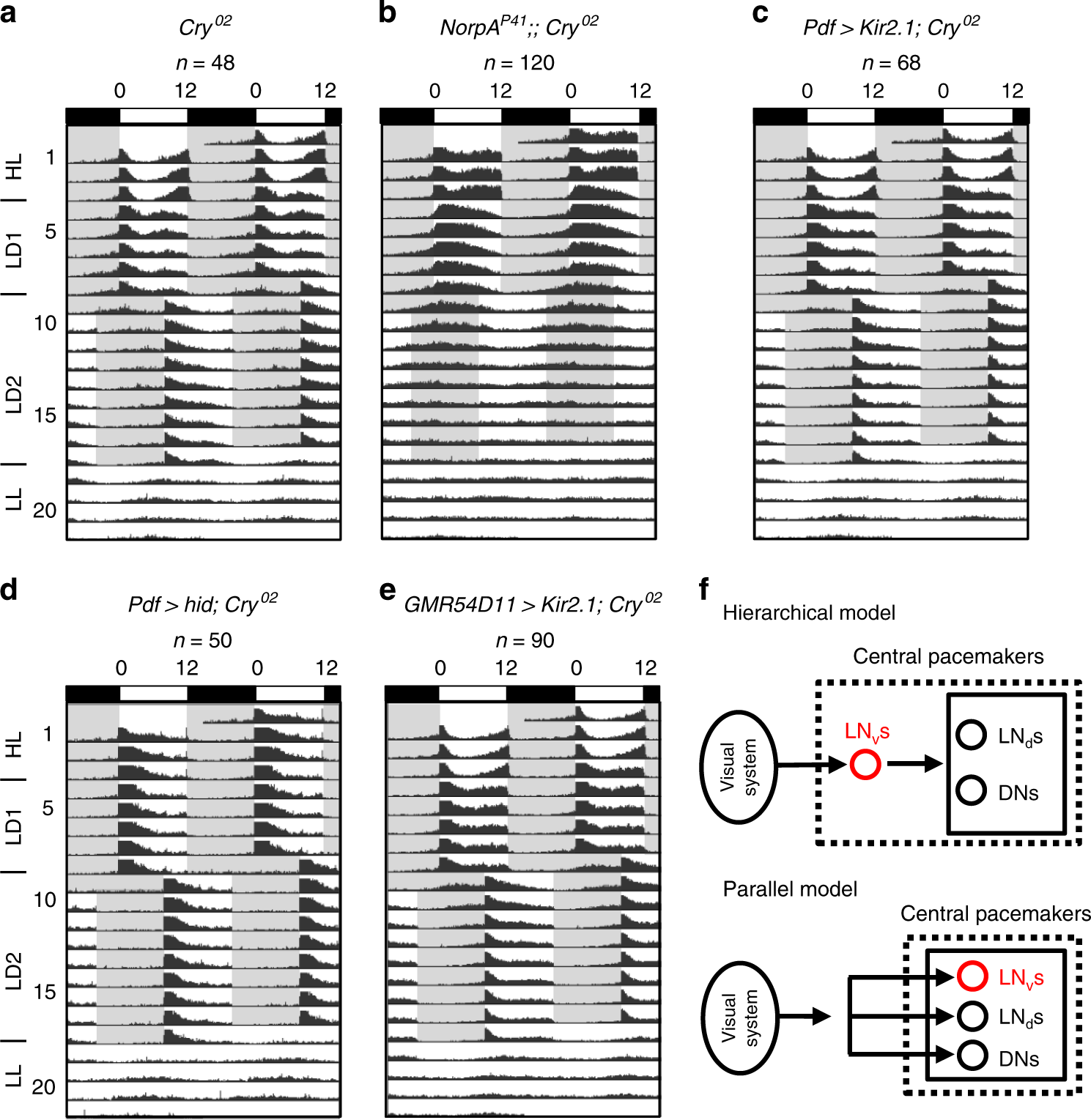 Hub Organized Parallel Circuits Of Central Circadian Pacemaker Voltage Figure 3 38 Comparison In A Circuit Neurons For Visual Photoentrainment Drosophila Nature Communications