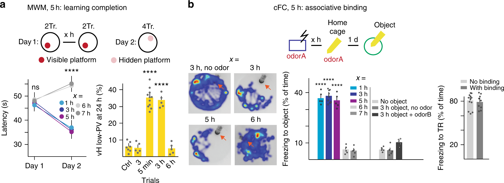 Time Units For Learning Involving Maintenance Of System Wide Cfos Further Tone Control Circuit Diagram Likewise Basic Electrical Expression In Neuronal Assemblies Nature Communications
