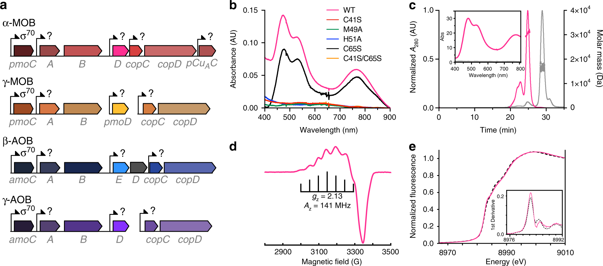 Characterization of a long overlooked copper protein from