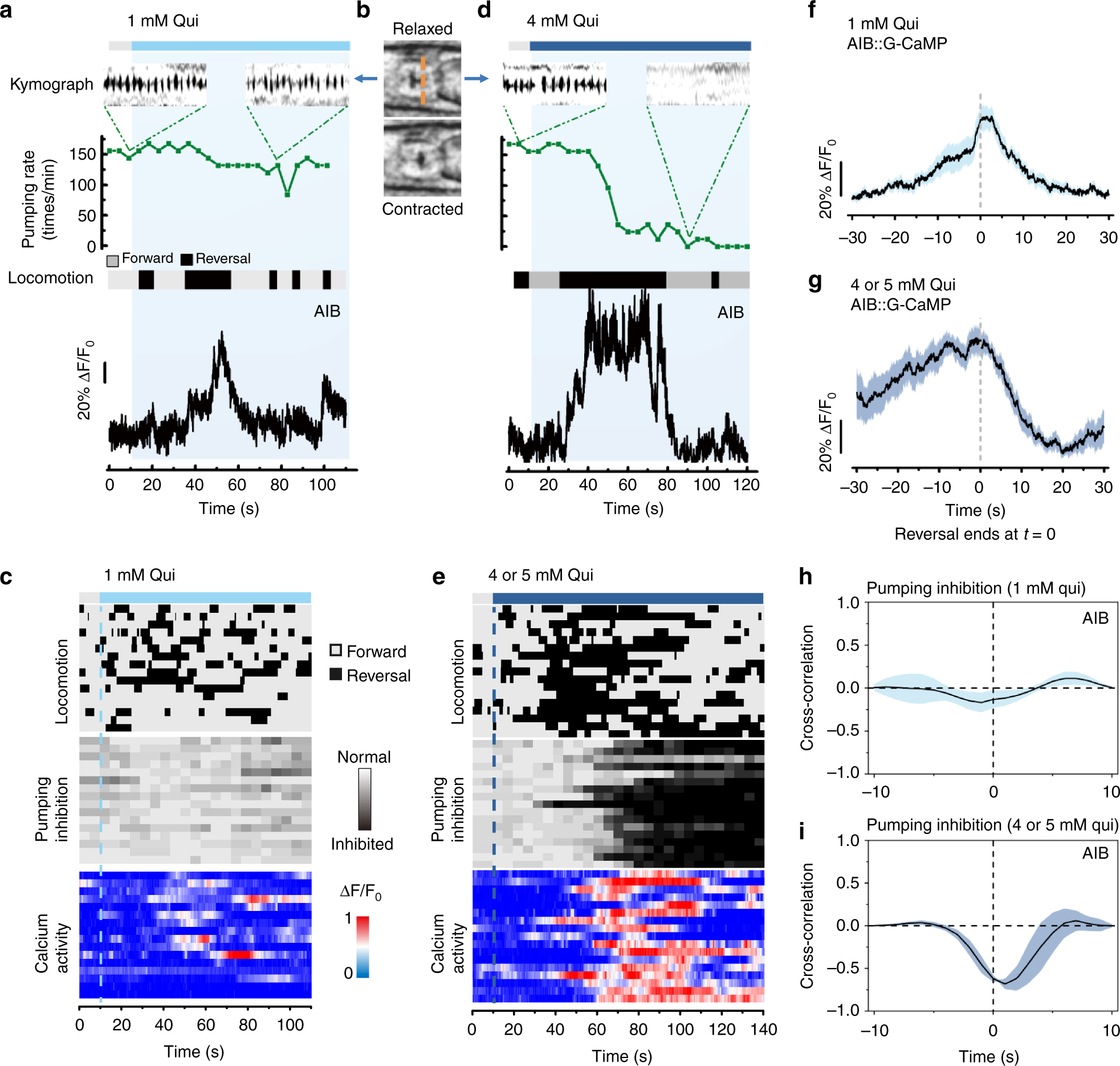Decoding The Intensity Of Sensory Input By Two Glutamate Receptors Pj Rims Wiring Diagram In One C Elegans Interneuron Nature Communications