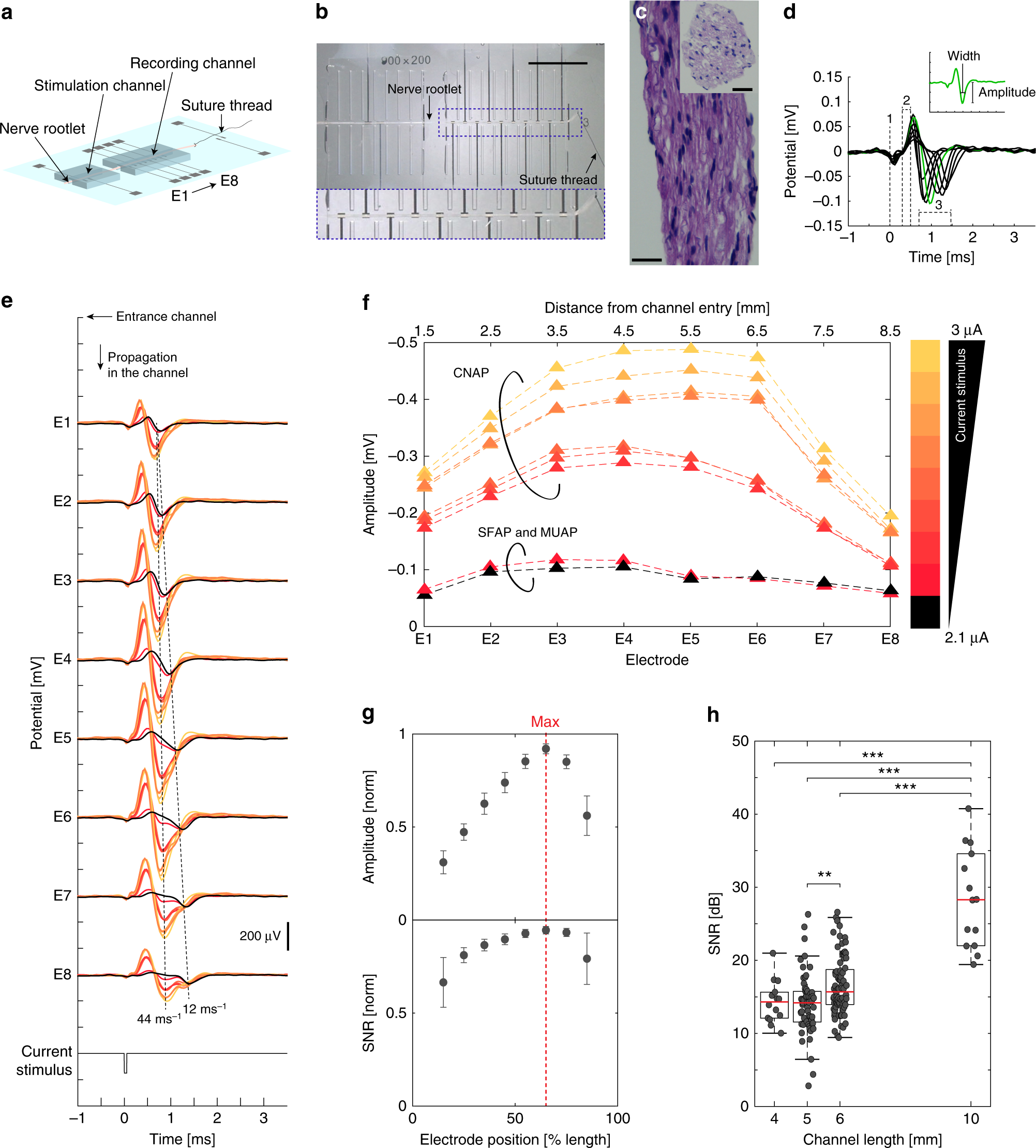 A Microfabricated Nerve On Chip Platform For Rapid Assessment Of Circuits Figure 26 Waveshapes Long Time Constant Rc Circuit Neural Conduction In Explanted Peripheral Fibers Nature Communications