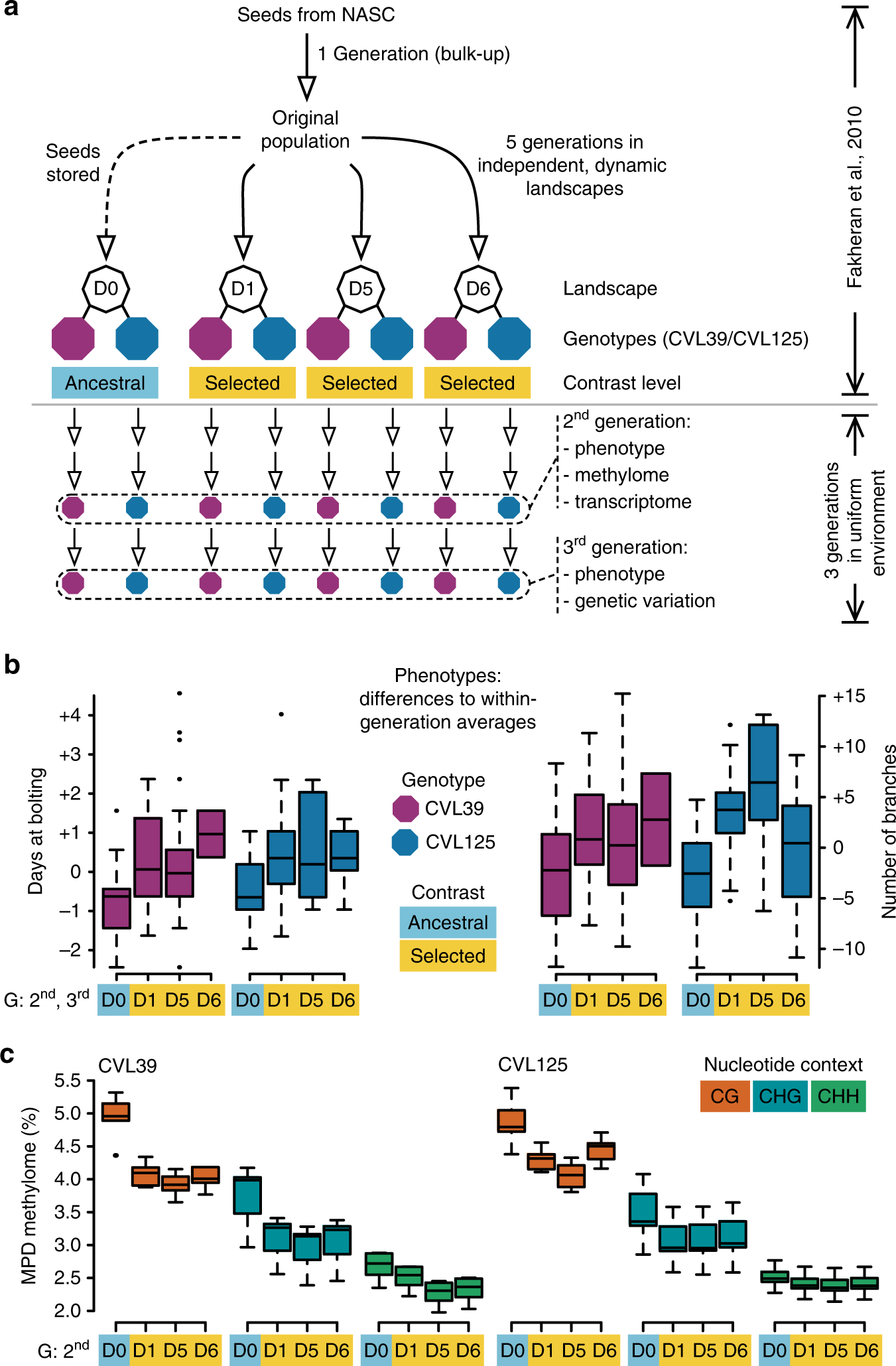 Contribution of epigenetic variation to adaptation in Arabidopsis