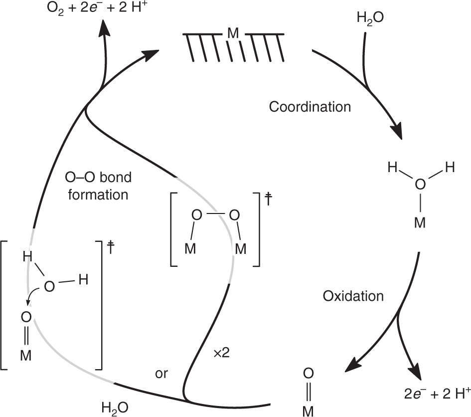 Direct oxygen isotope effect identifies the rate-determining