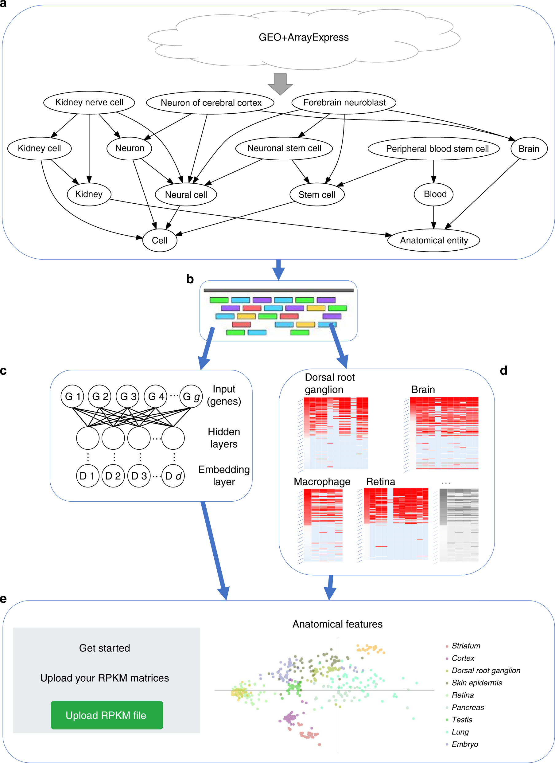 A web server for comparative analysis of single-cell RNA-seq ...