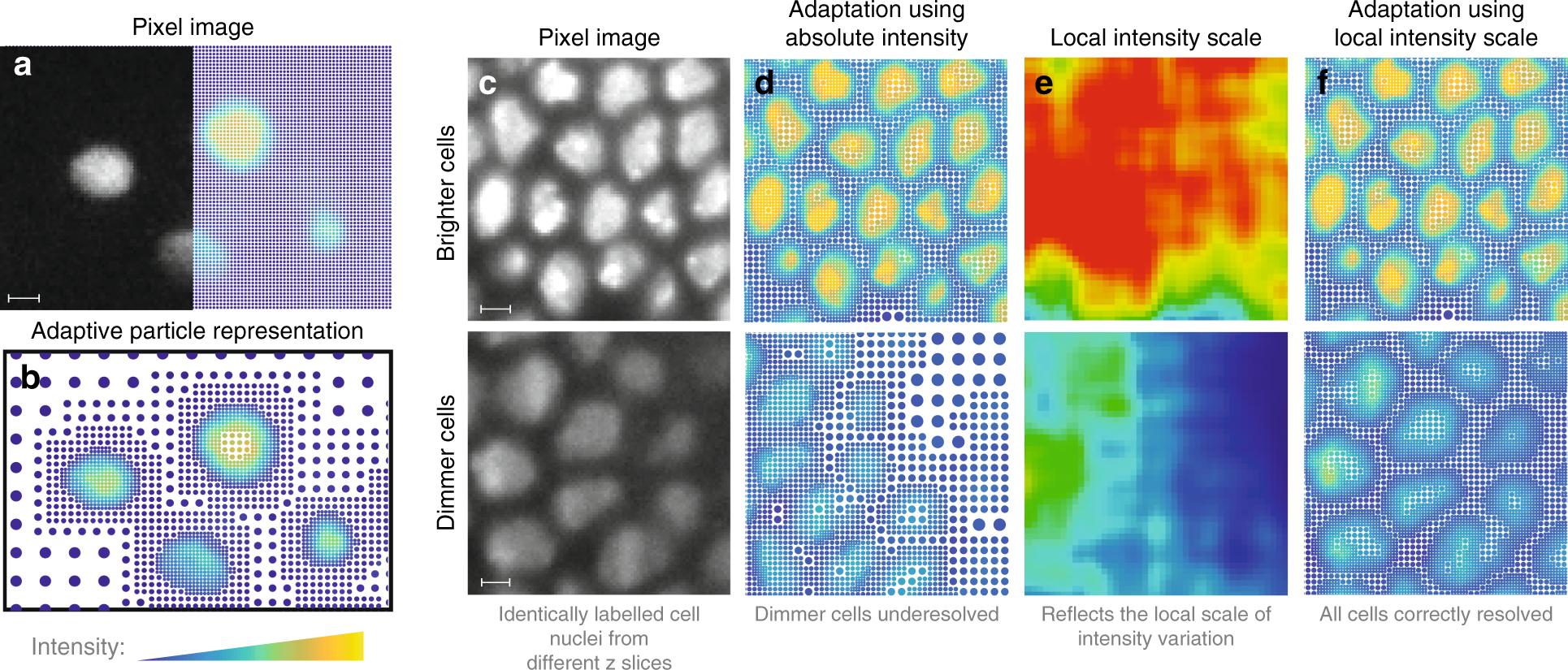 Adaptive particle representation of fluorescence microscopy