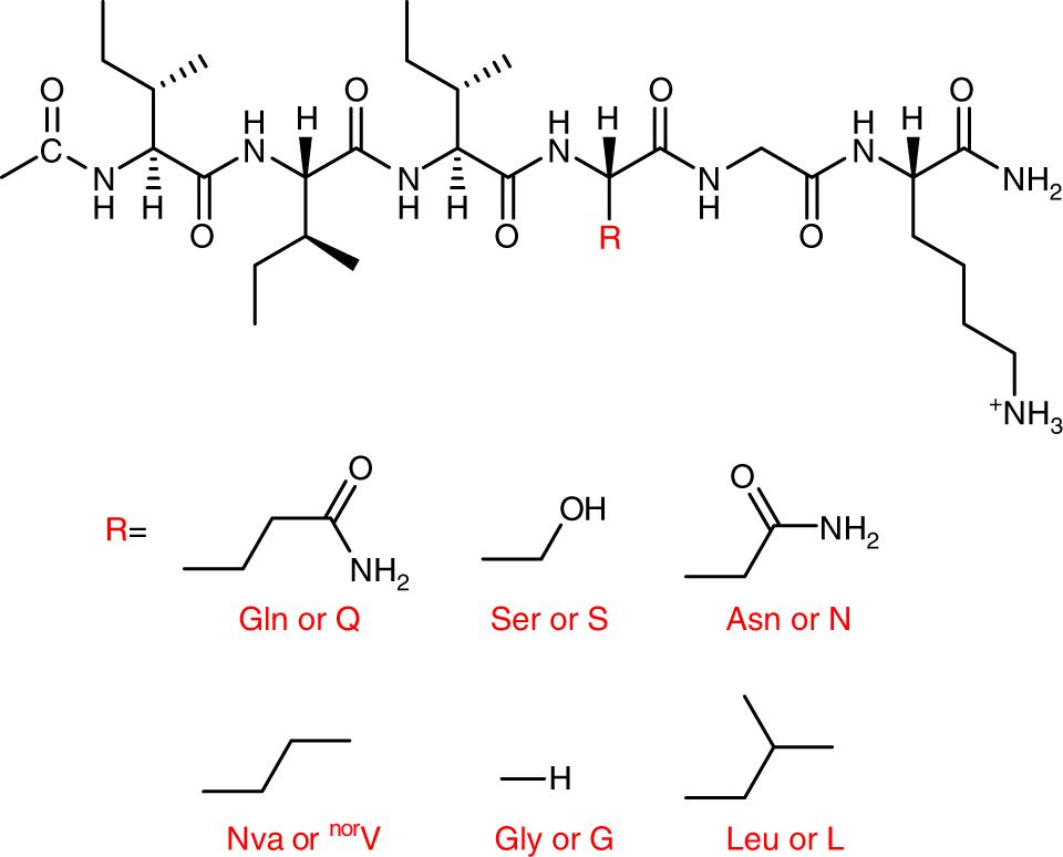 Nanoribbons self-assembled from short peptides demonstrate