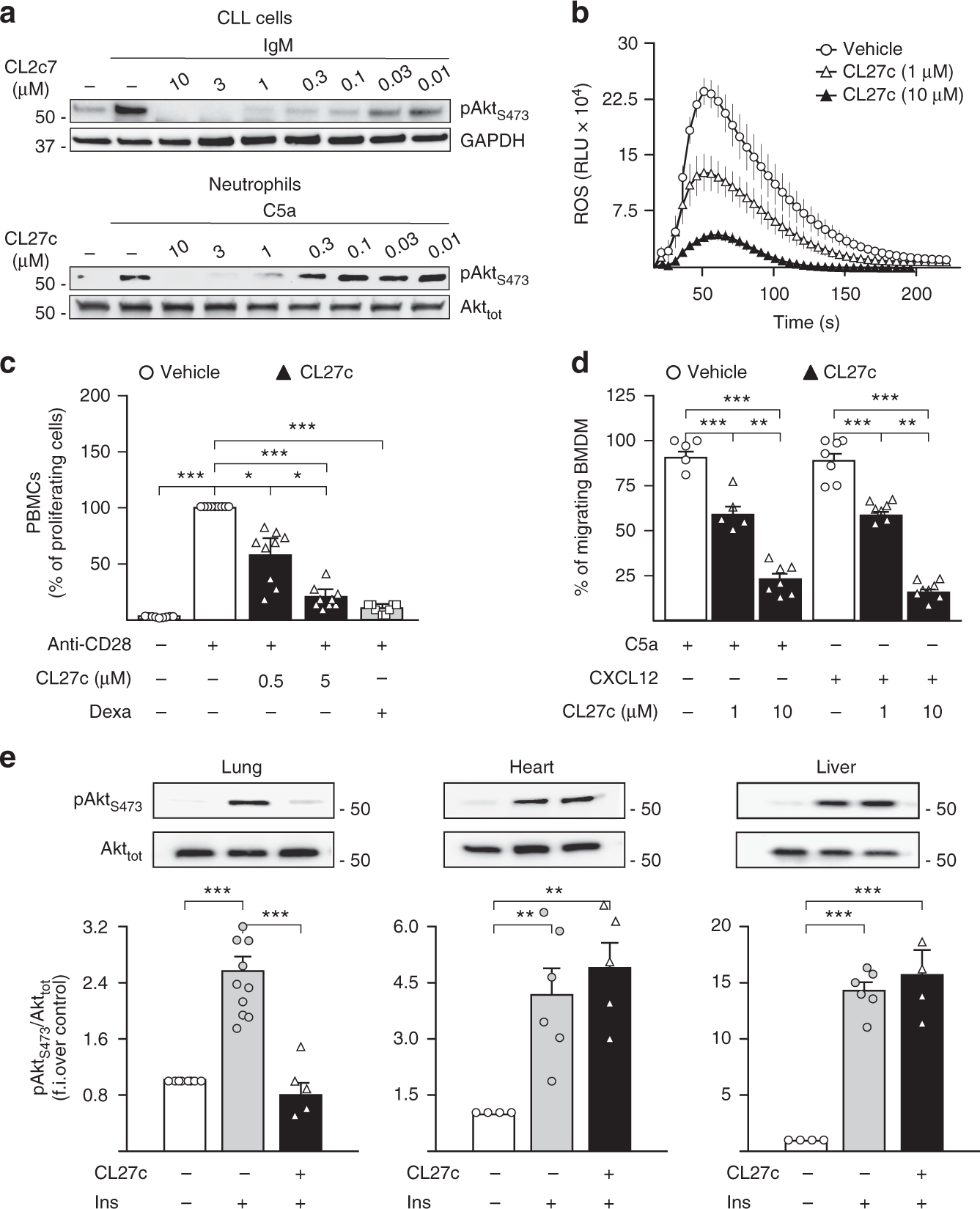 Inhalation of the prodrug PI3K inhibitor CL27c improves lung