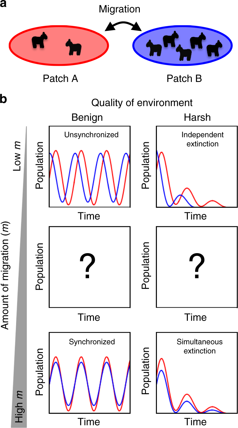 Migration alters oscillatory dynamics and promotes survival