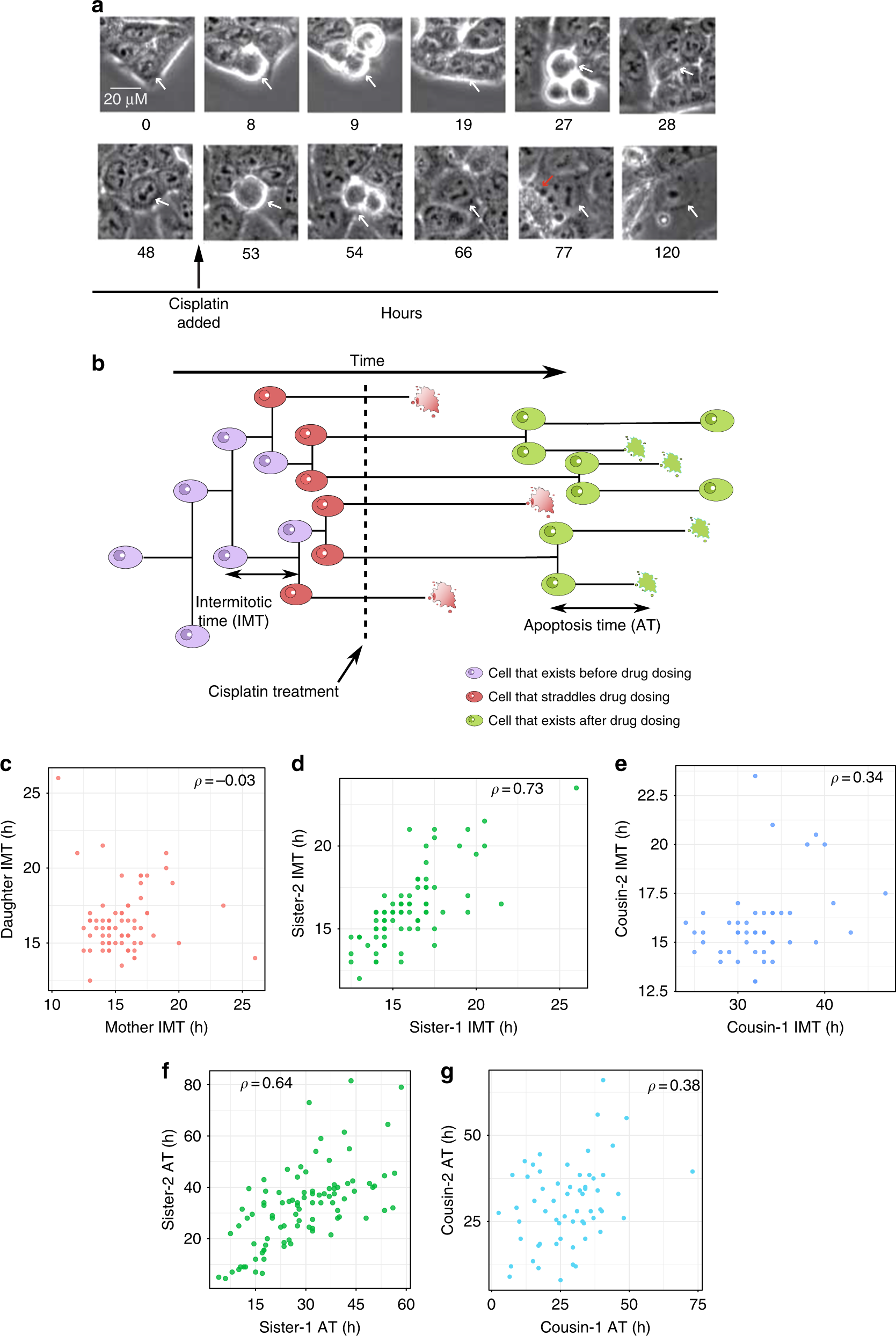 Hidden heterogeneity and circadian-controlled cell fate