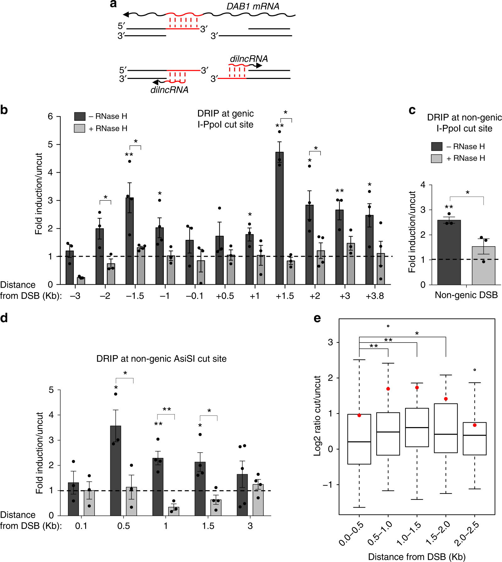 BRCA2 controls DNA:RNA hybrid level at DSBs by mediating
