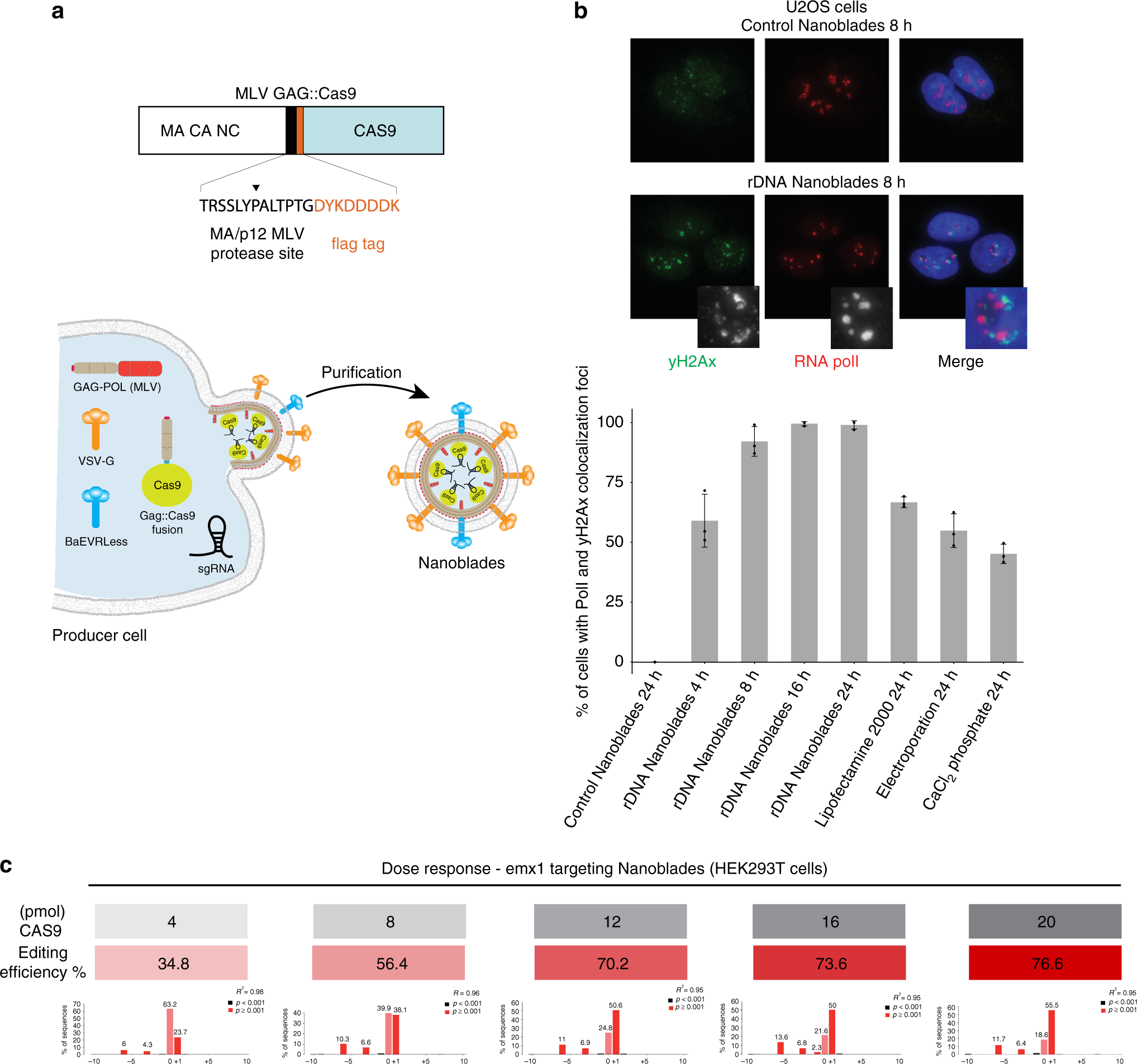 Genome editing in primary cells and in vivo using viral-derived