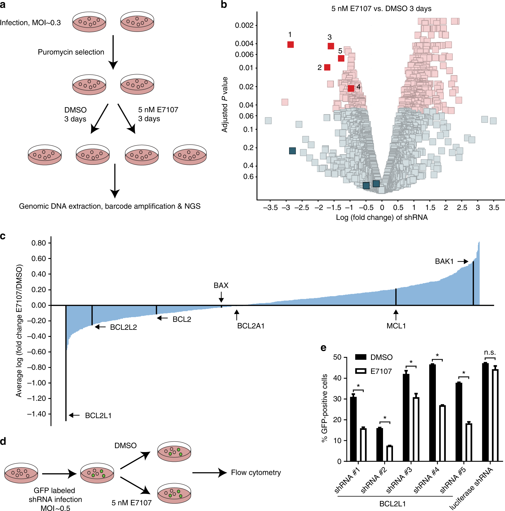 Sensitivity to splicing modulation of BCL2 family genes