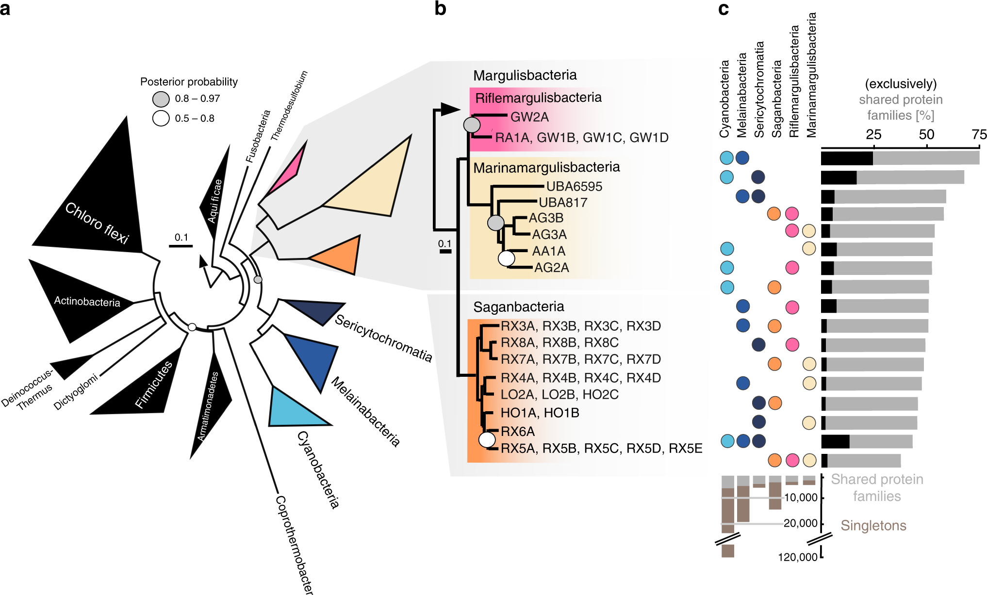 Hydrogen-based metabolism as an ancestral trait in lineages sibling