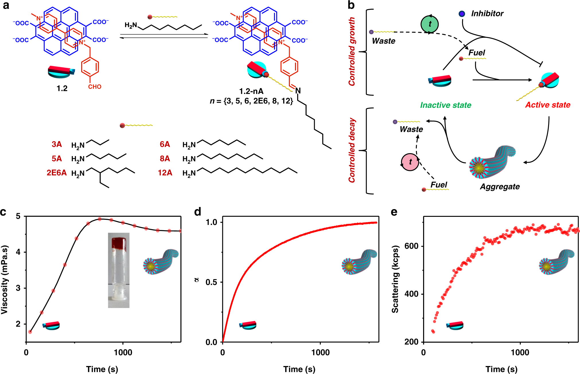Chemical fuel-driven living and transient supramolecular