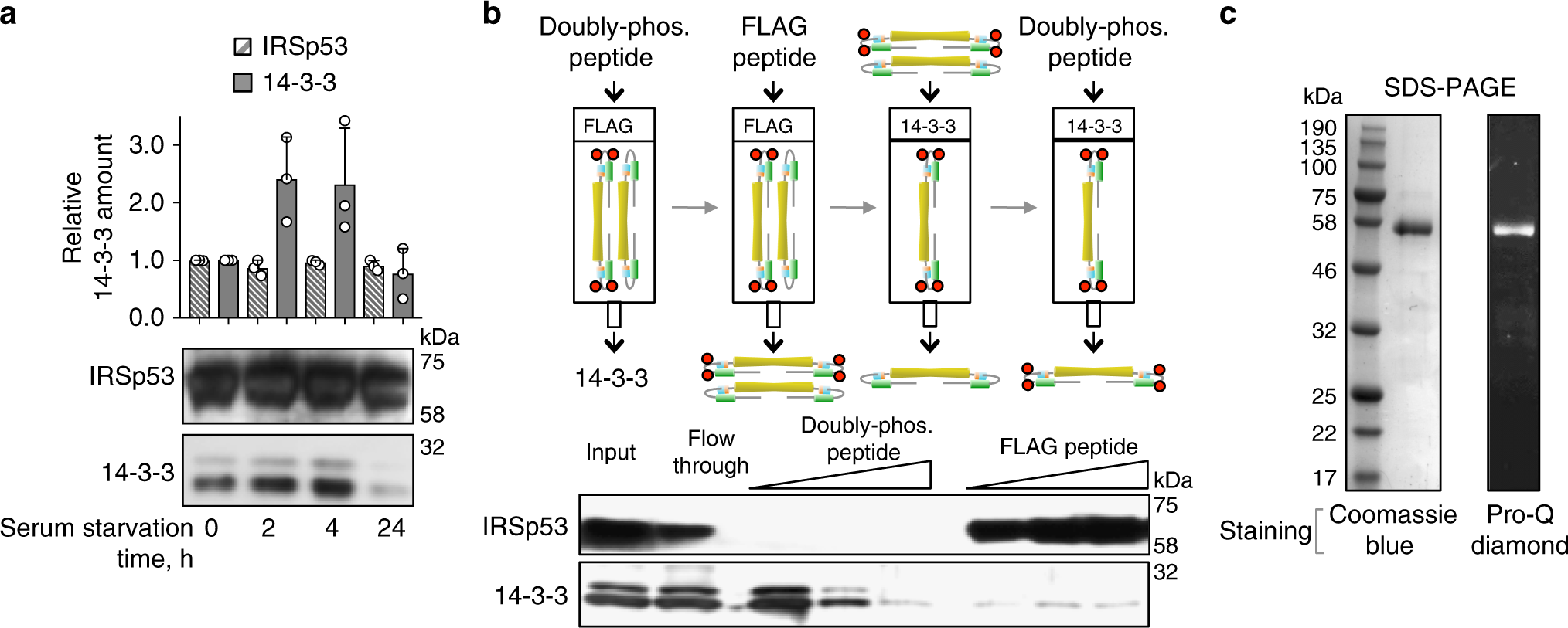 Mechanism Of Irsp53 Inhibition By 14 3 3 Nature Communications