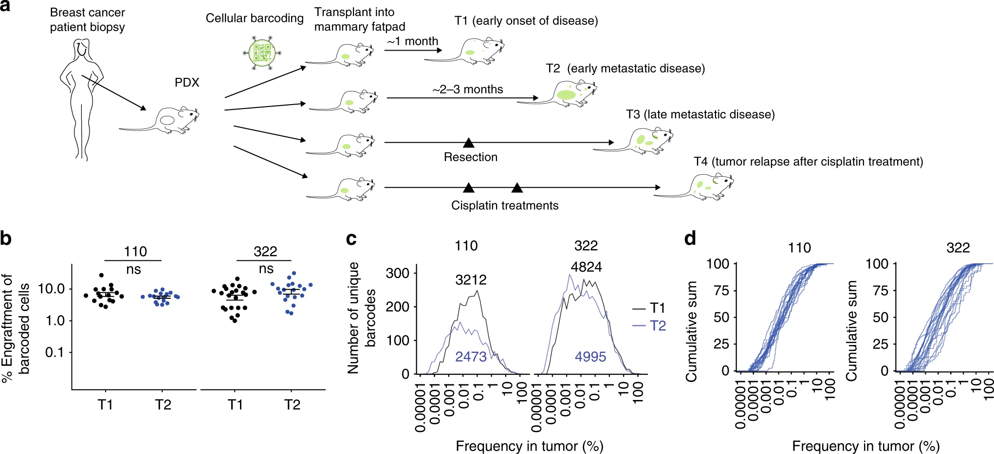 Barcoding reveals complex clonal behavior in patient-derived