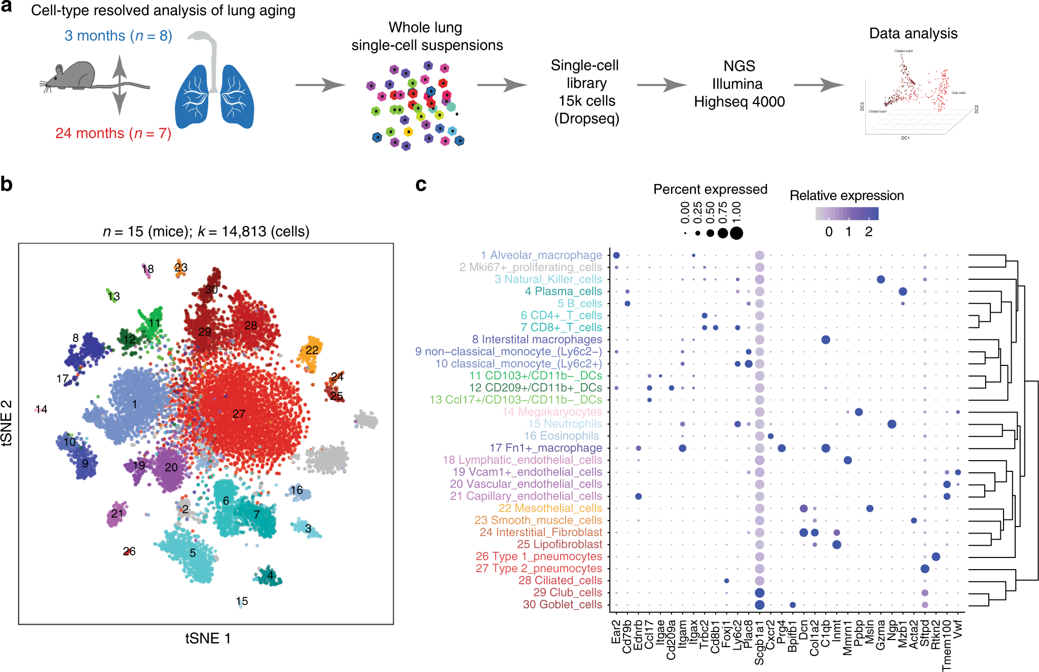 An atlas of the aging lung mapped by single cell transcriptomics and