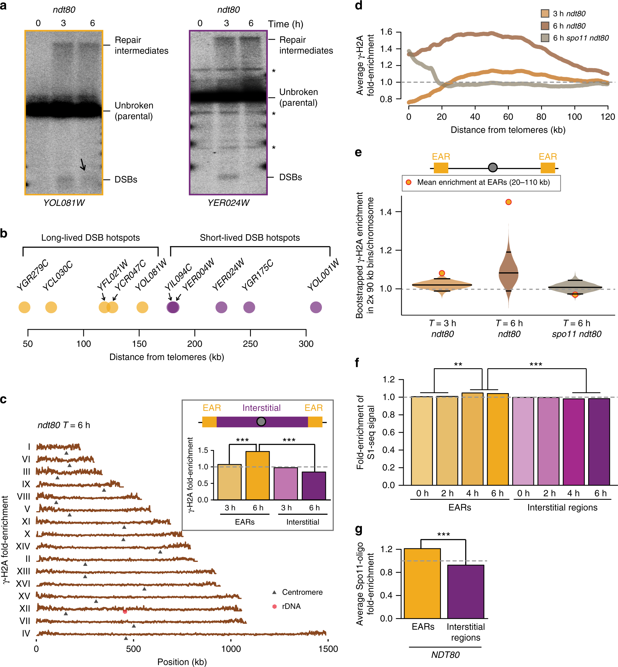 Persistent Dna Break Potential Near Telomeres Increases Initiation Of Meiotic Recombination On Short Chromosomes Nature Communications