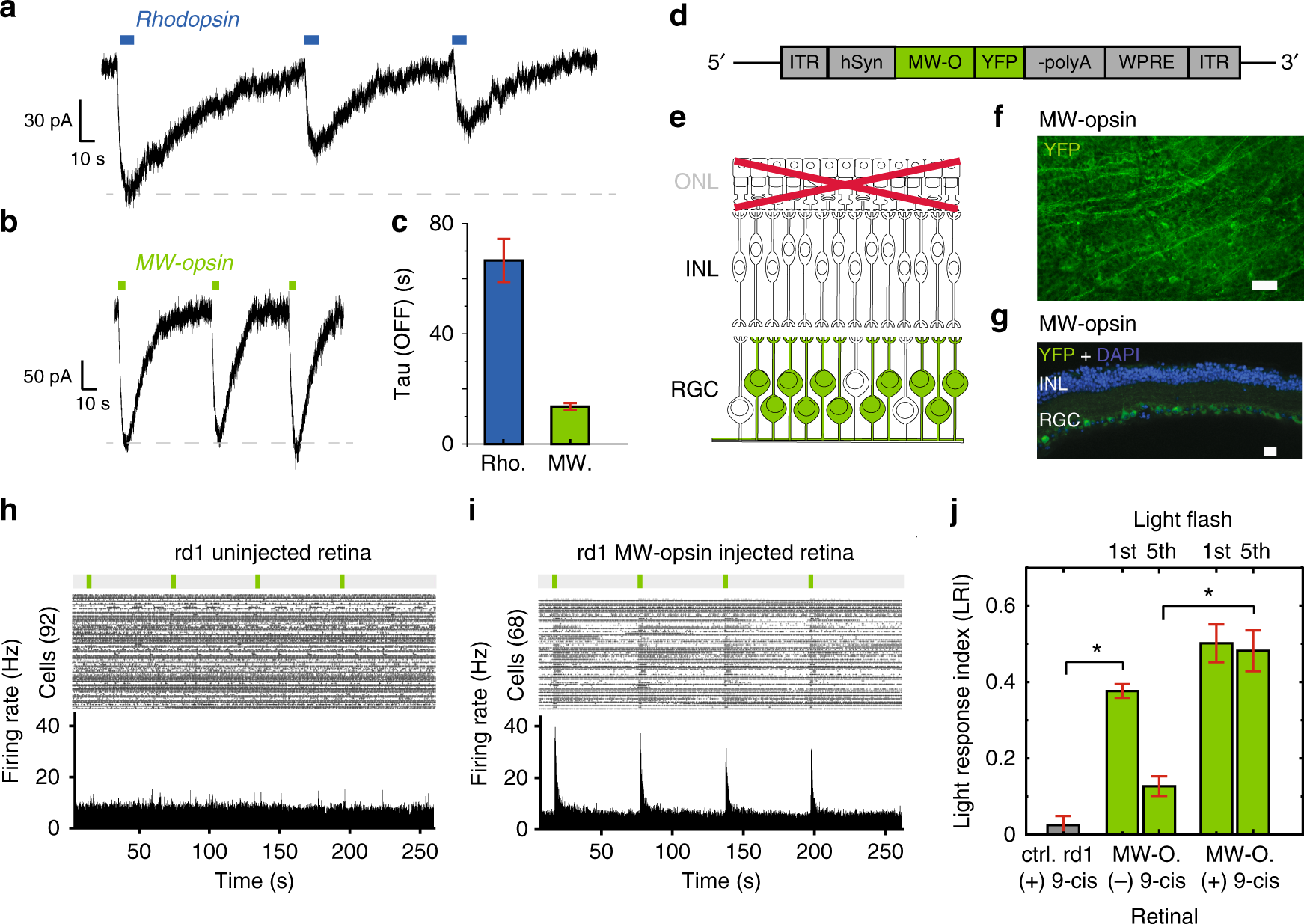 125a23631f0 Restoration of high-sensitivity and adapting vision with a cone opsin