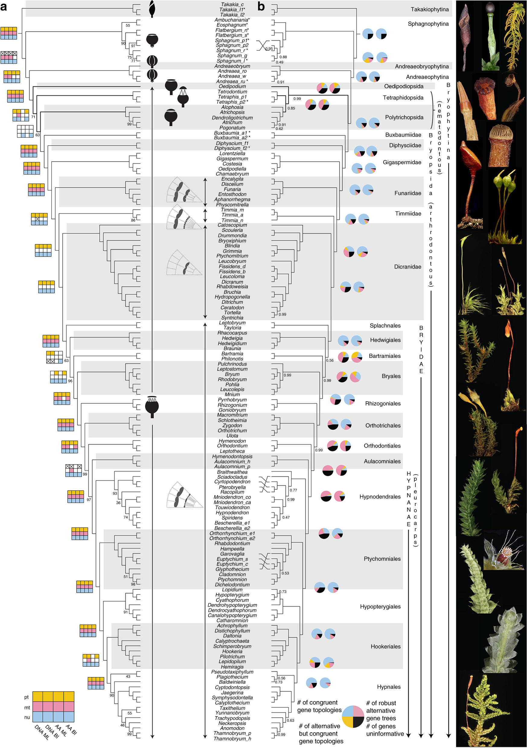 Resolution of the ordinal phylogeny of mosses using targeted