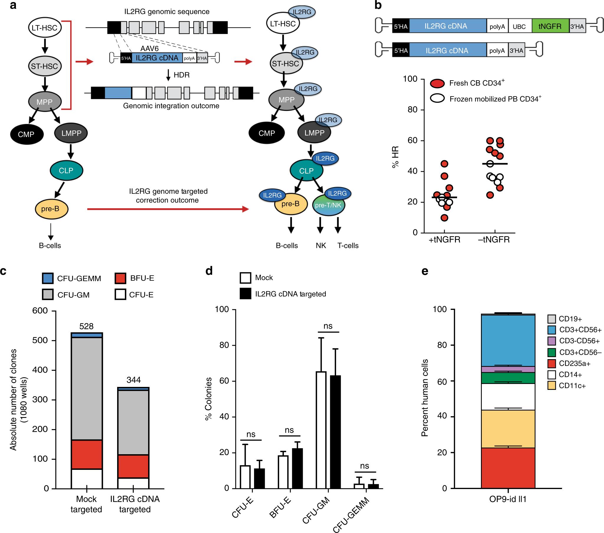 Gene correction for SCID-X1 in long-term hematopoietic stem cells